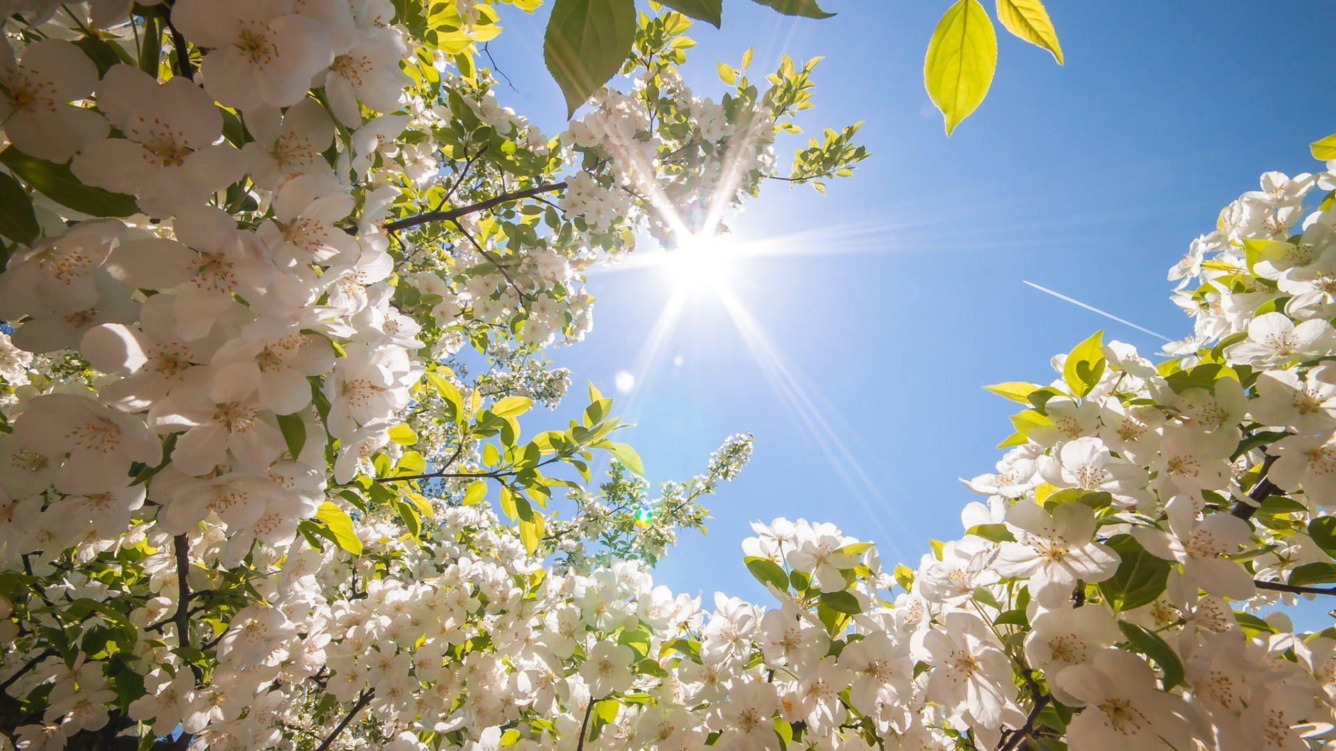 44 spring wallpapers 183�� download free hd wallpapers for
