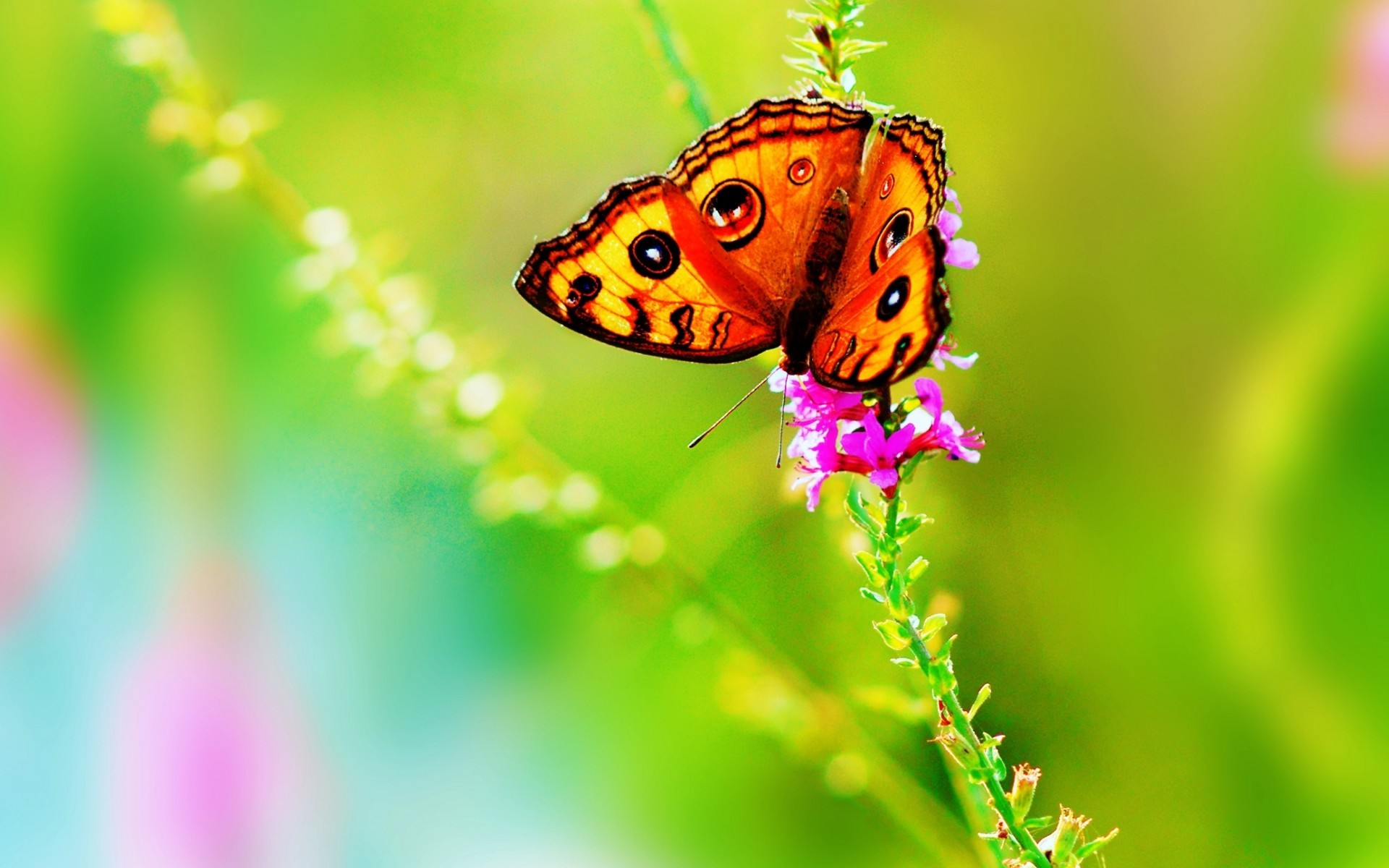Cute Butterfly Wallpapers ·① WallpaperTag