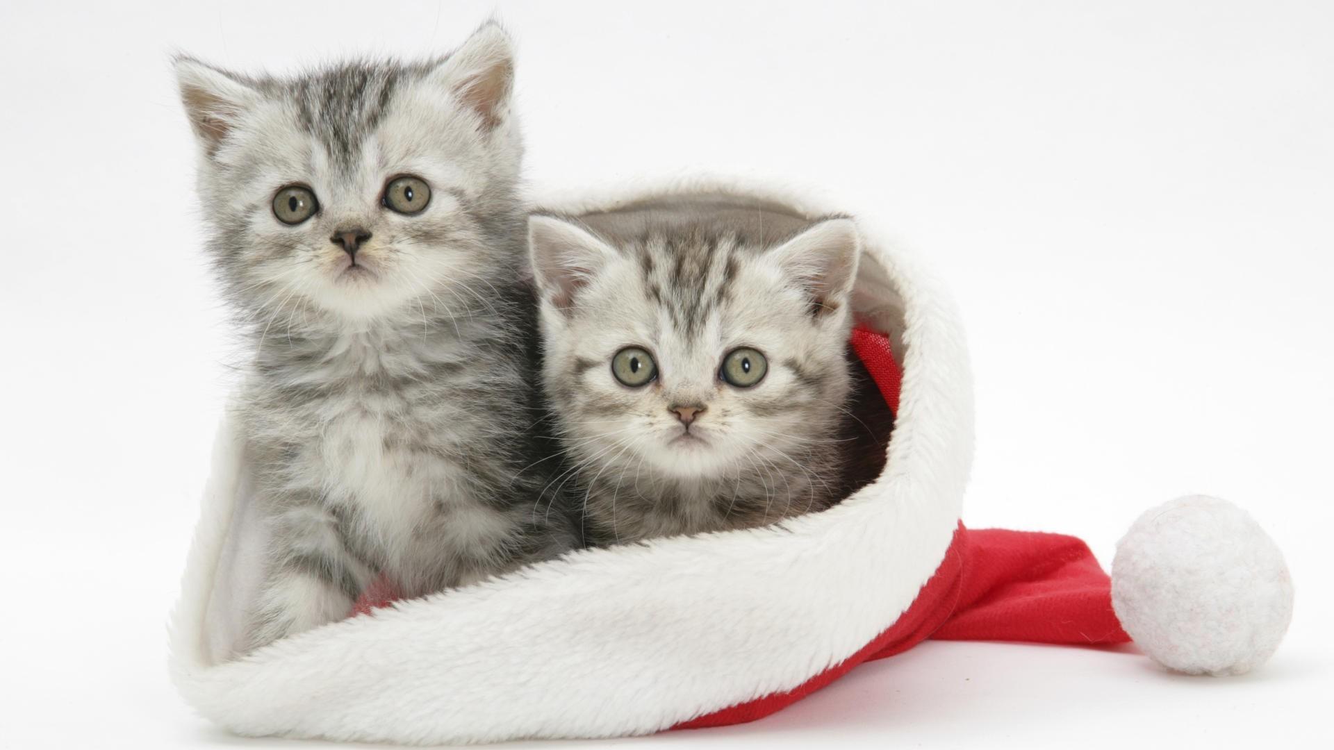 christmas kitten wallpaper ·①