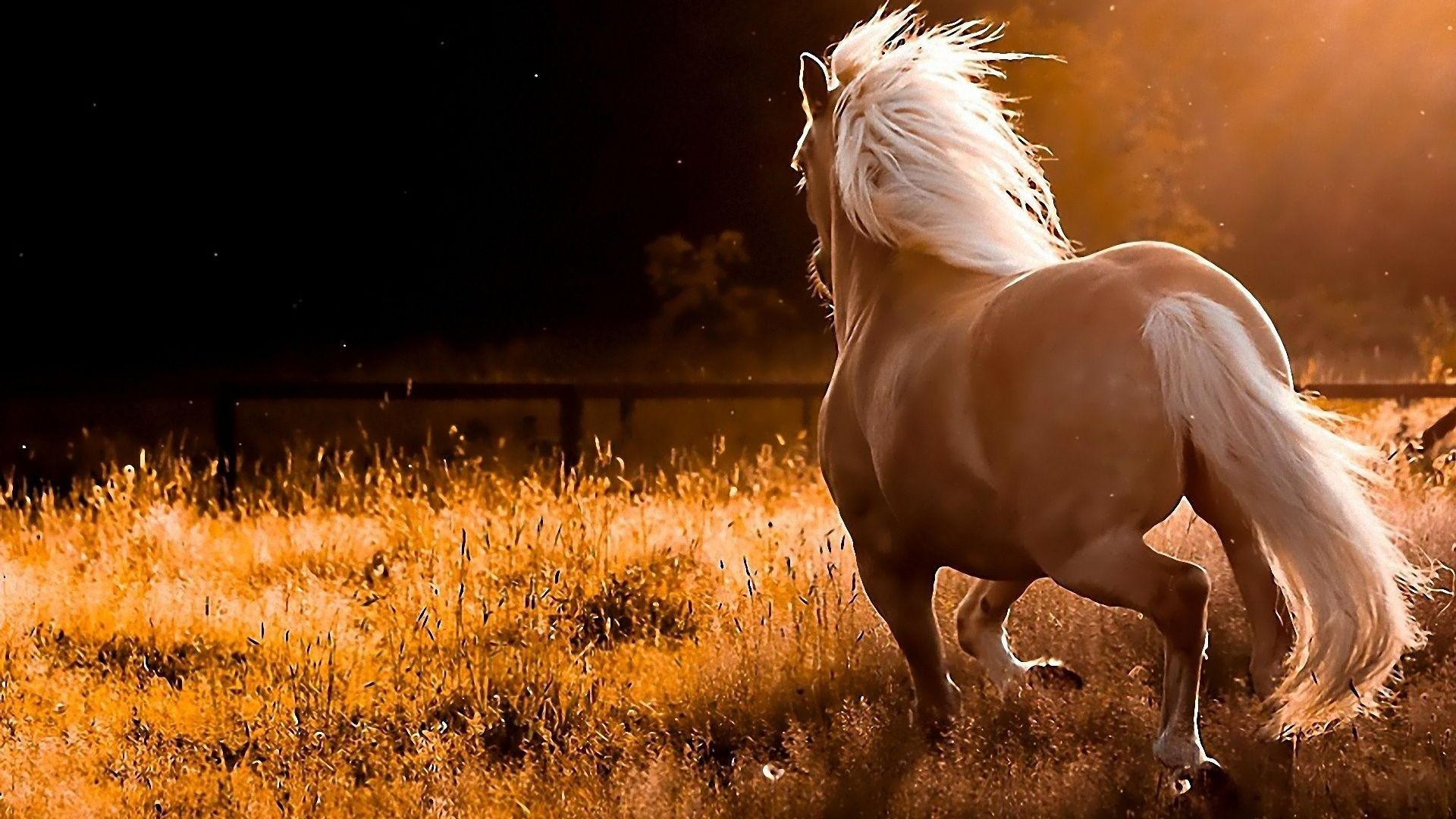 Horse Wallpaper For Computer Wallpapertag