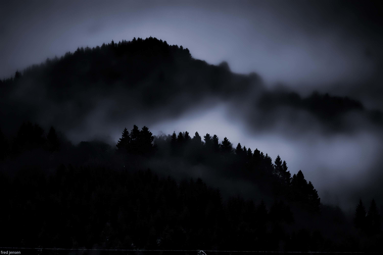 Dark Woods Wallpaper 1