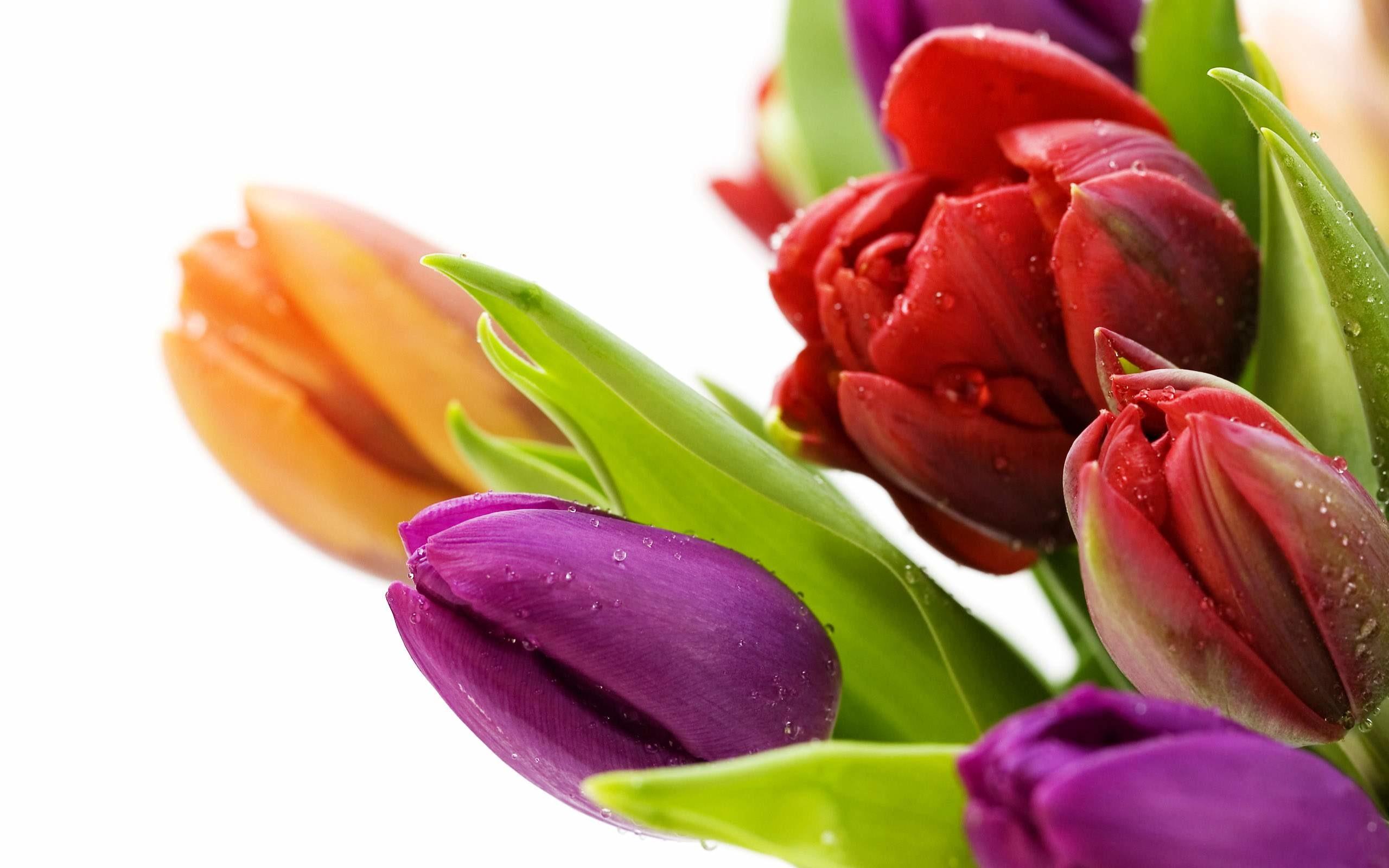 Pictures of beautiful flowers wallpapers beautiful izmirmasajfo