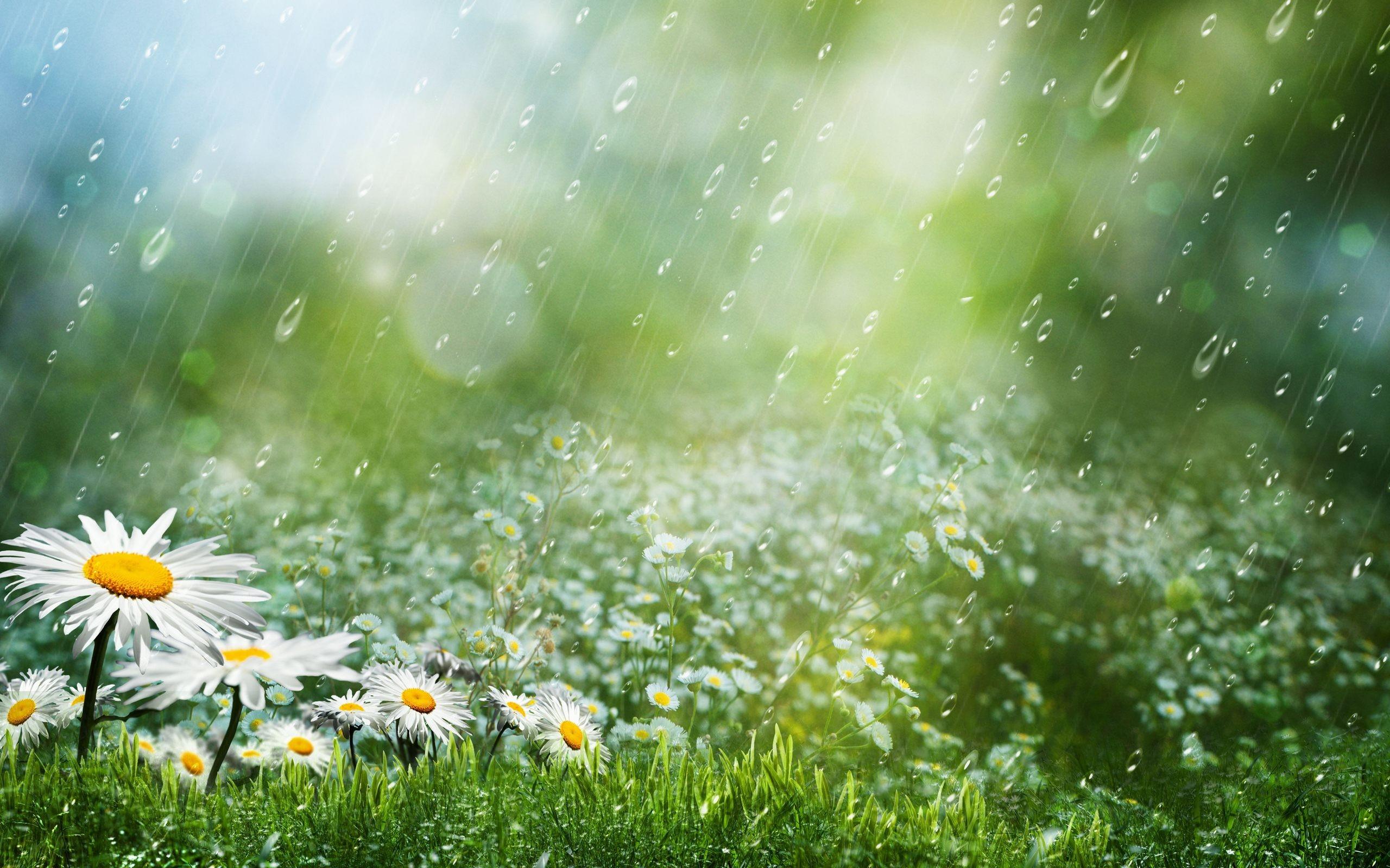 Rain wallpaper HD ·① Download free awesome full HD ...
