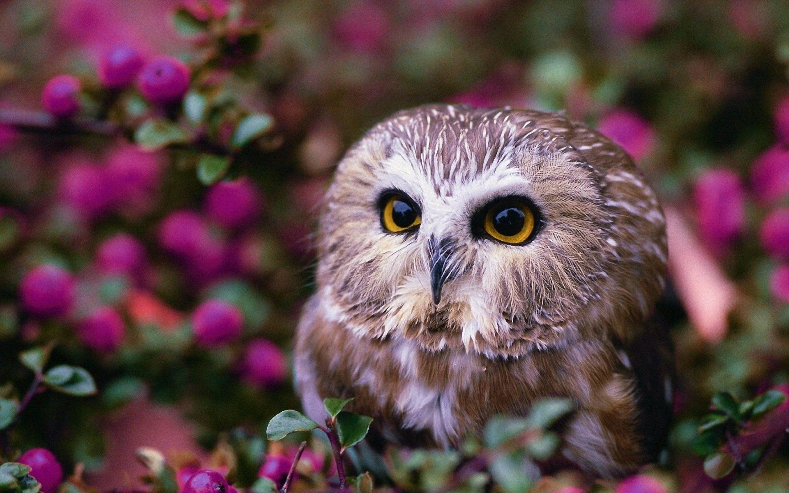 2560x1600 Cute Owl Wallpaper