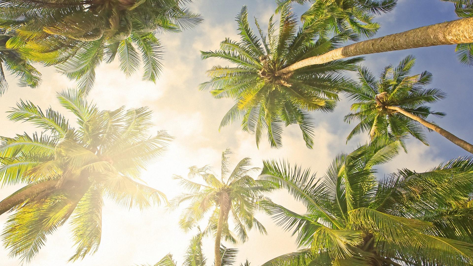 palm tree desktop wallpaper 183��