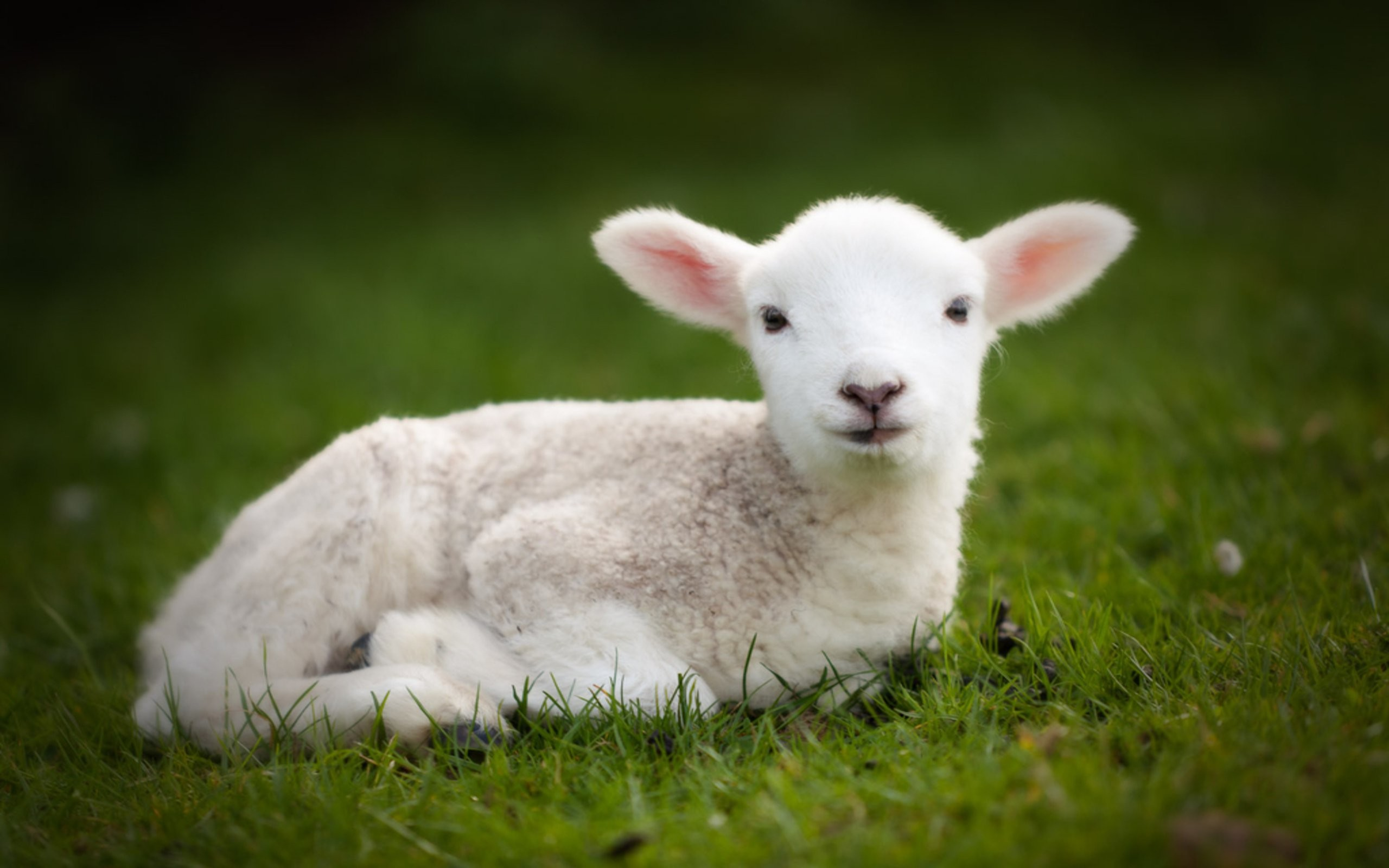 Cute Animal Wallpapers Free: Cute Baby Animal Wallpaper ·① WallpaperTag