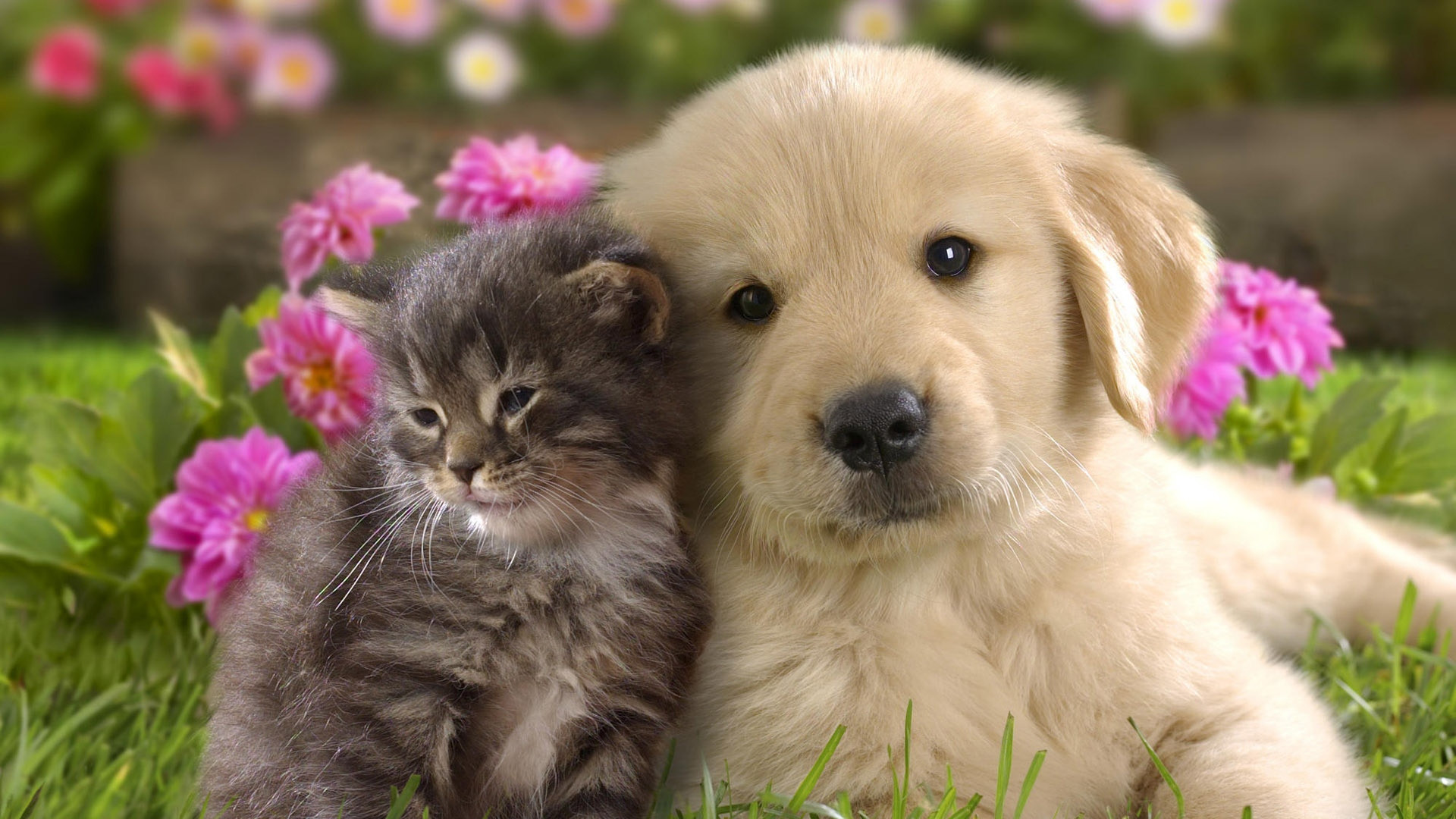 Puppy Desktop Backgrounds 1