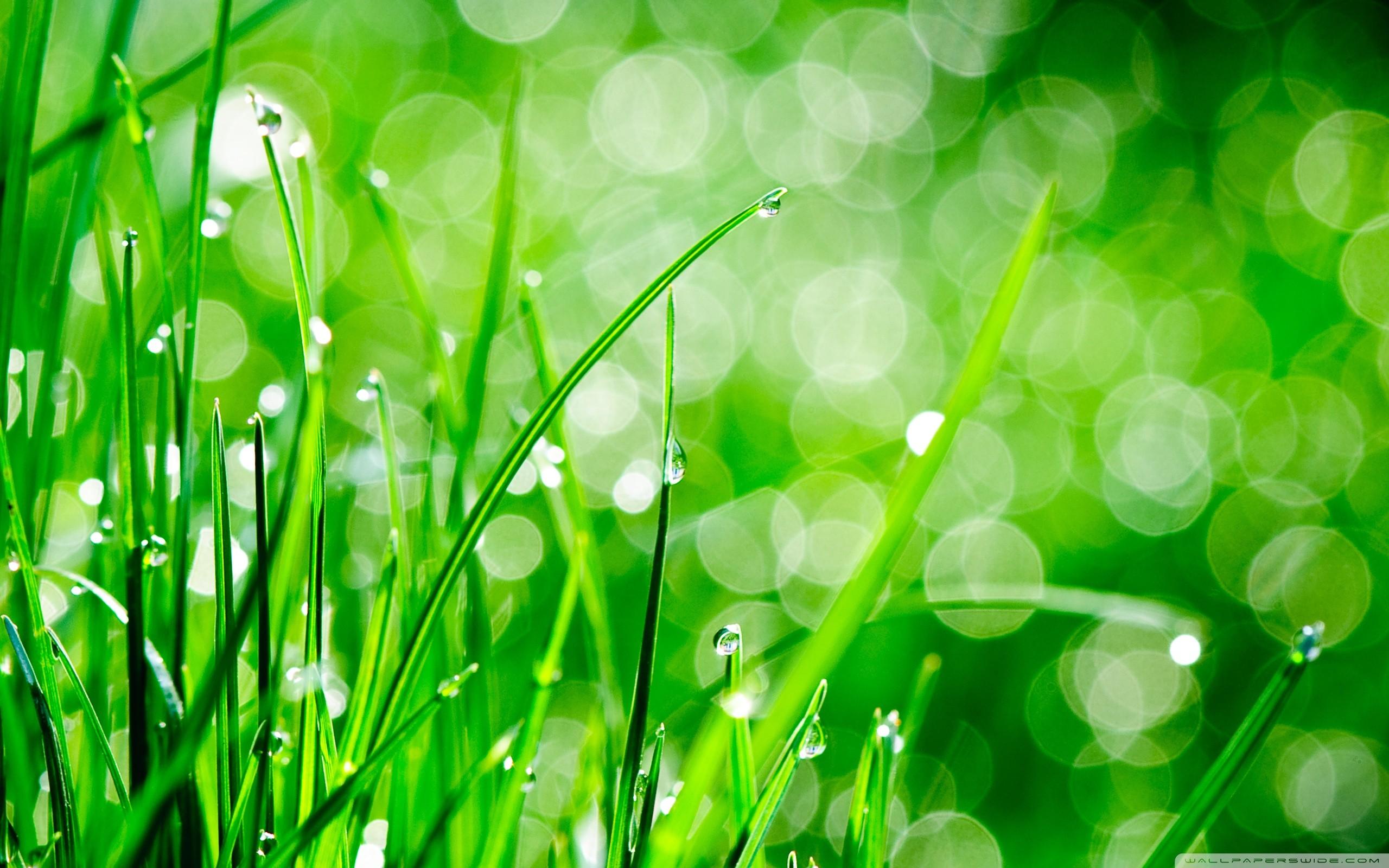 green grass background - HD2560×1600