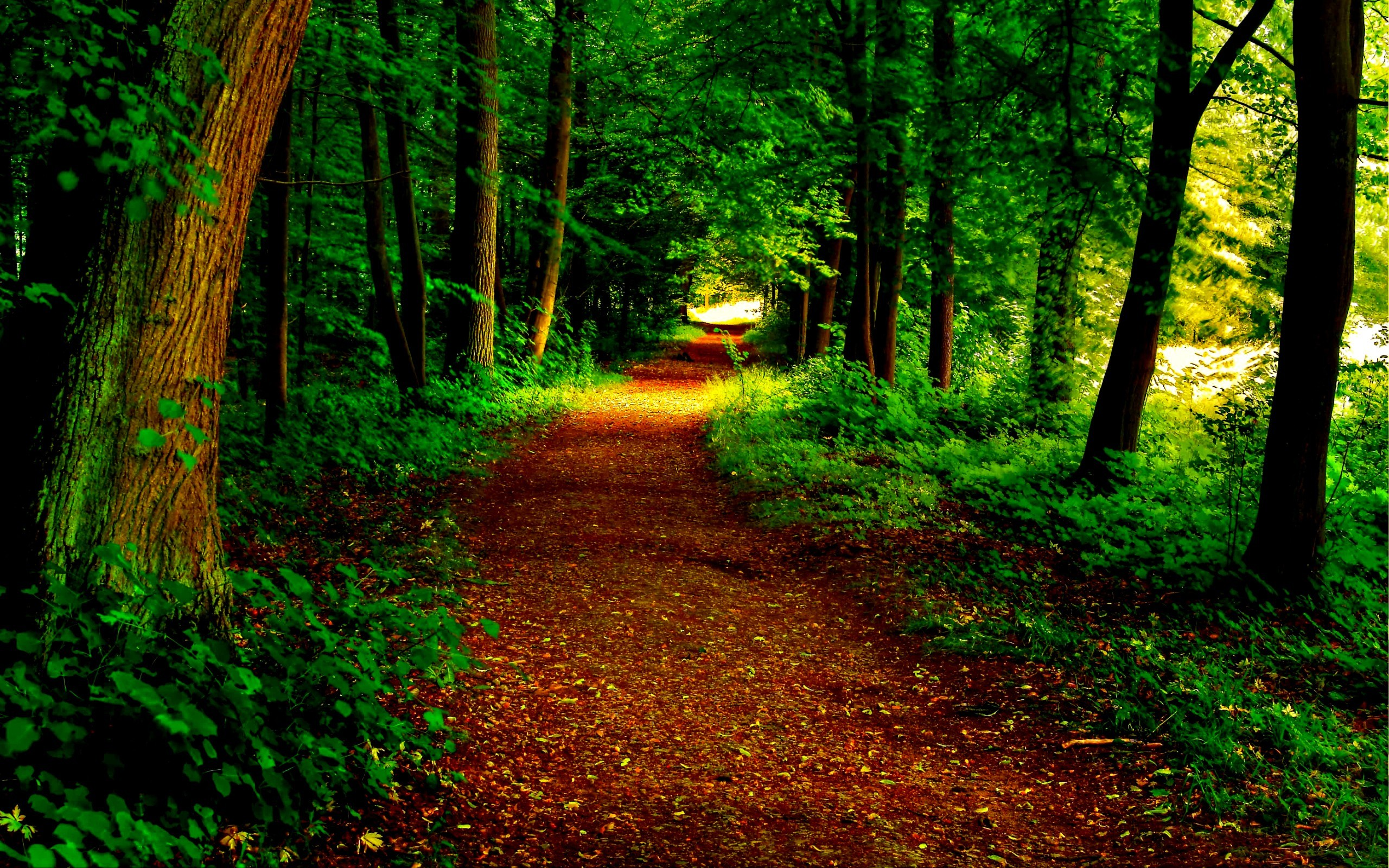 Beautiful forest wallpaper for Gorgeous wallpapers for walls