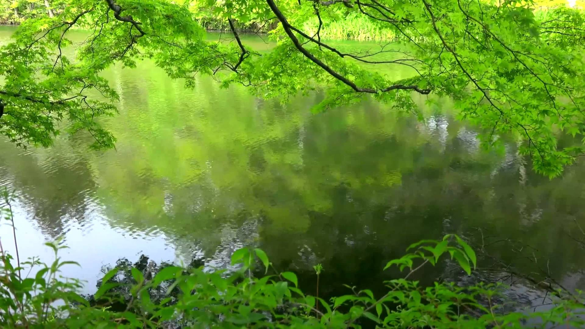 Nature Background Hd Download Free Cool Full Hd Backgrounds For
