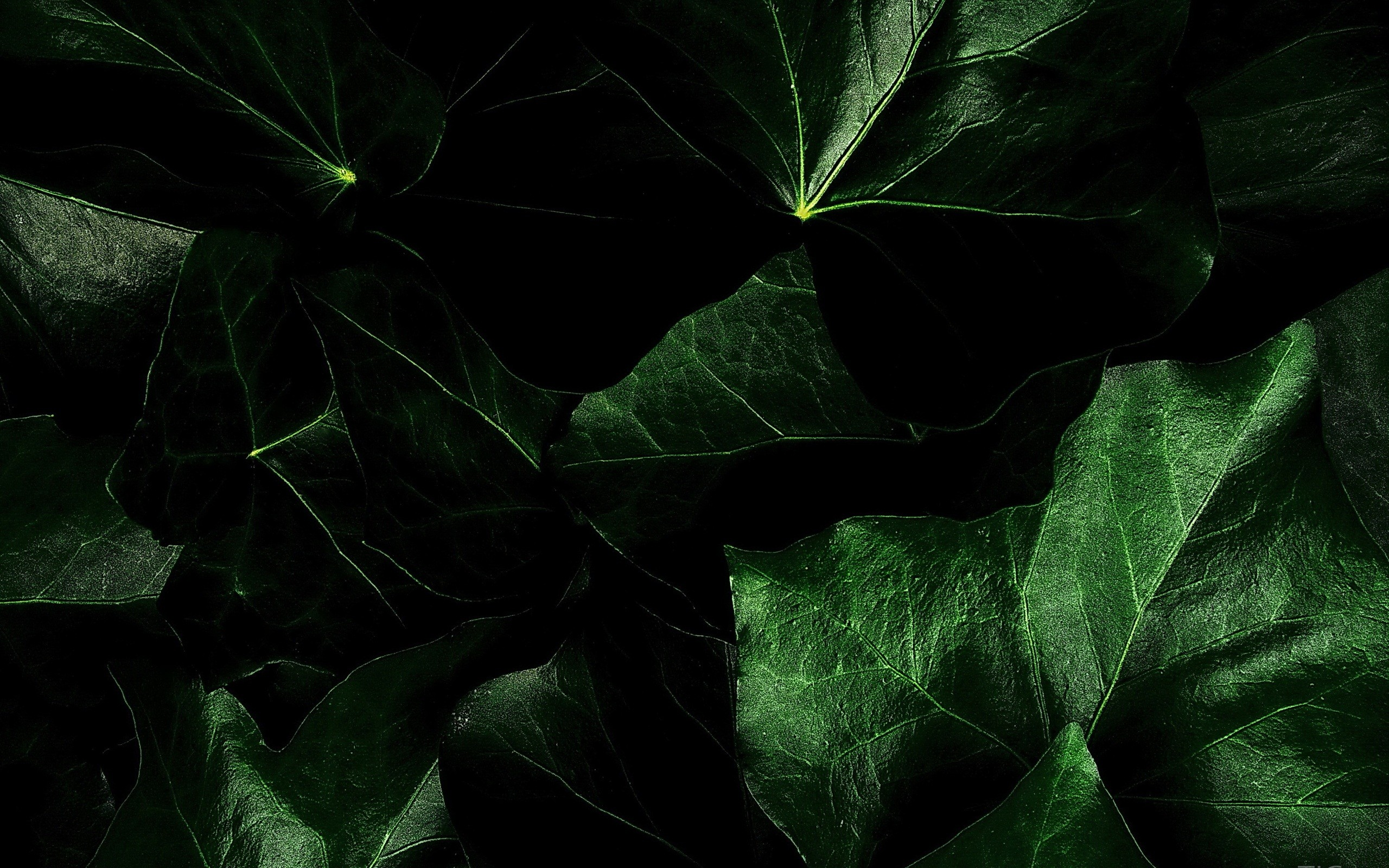 Dark Green Nature Wallpapers Mobile: Dark Green Background ·① Download Free High Resolution