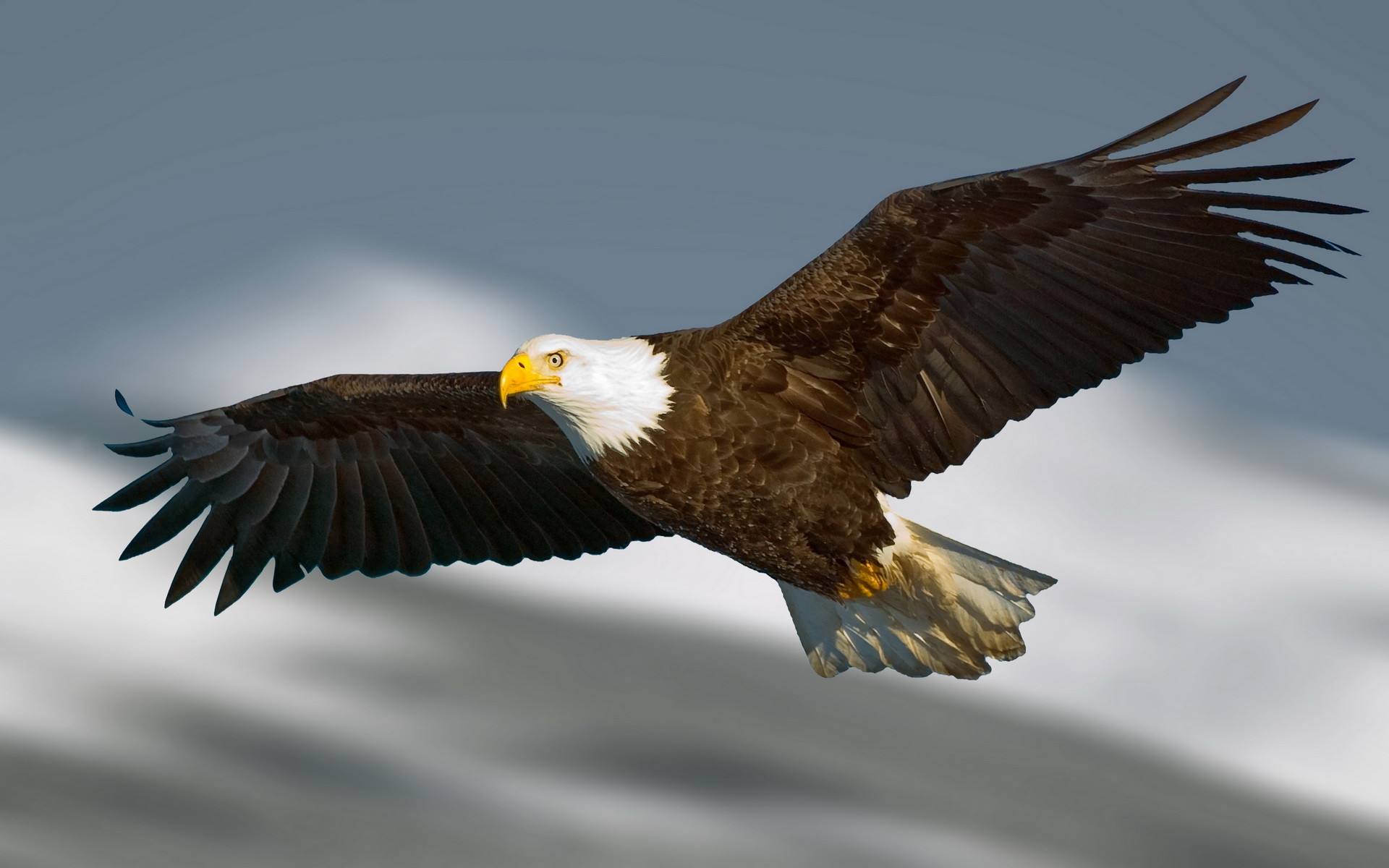 how to make a flying eagle
