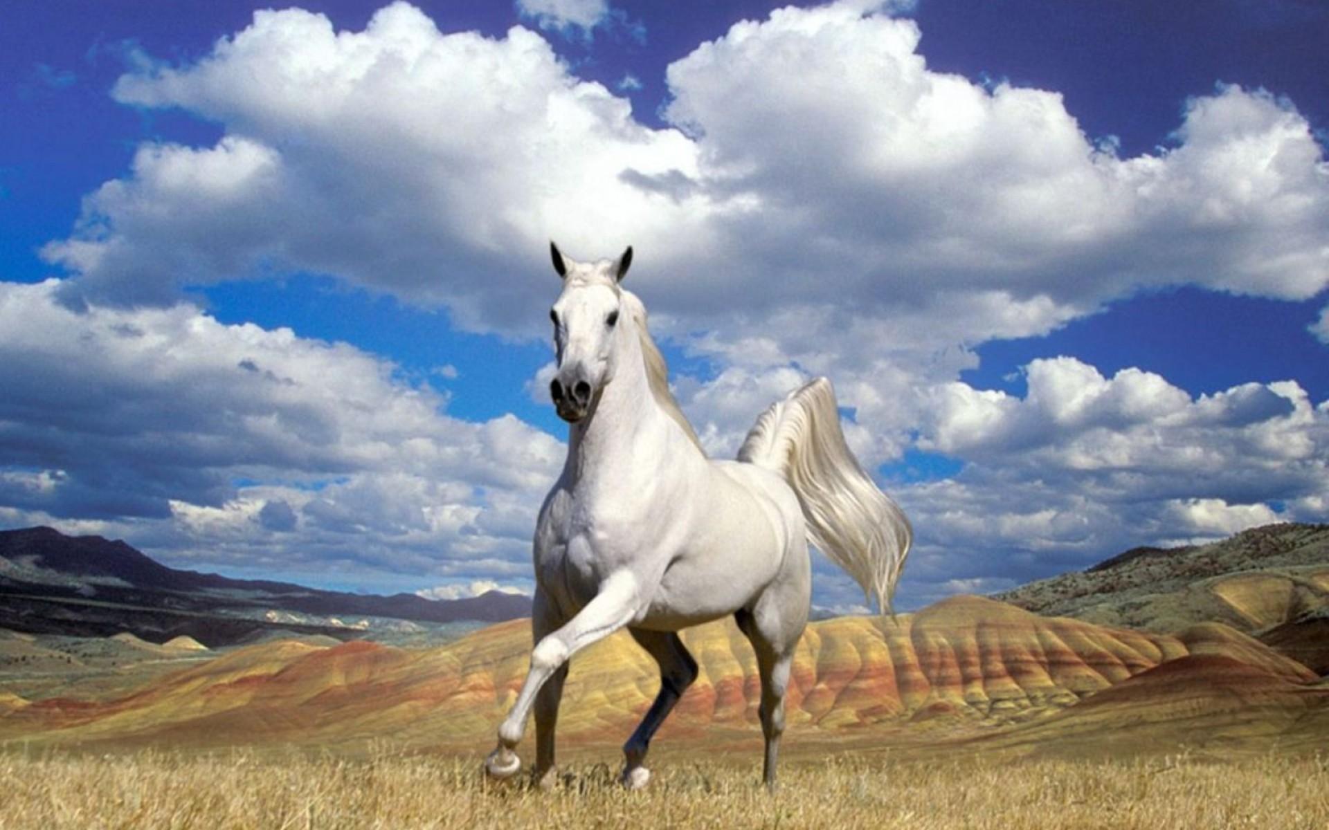 Arabian Horse Wallpaper Wallpapertag