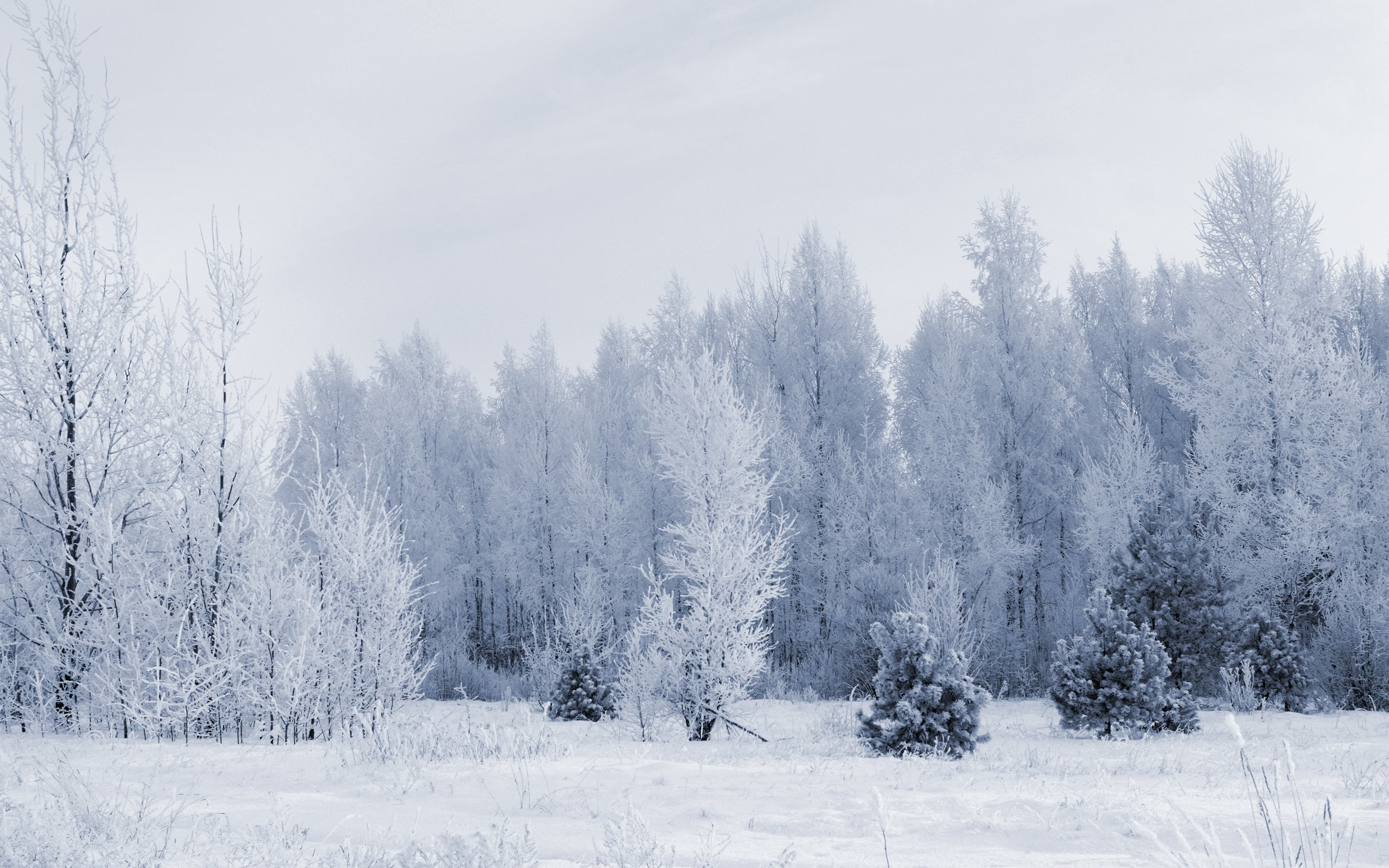 Snow forest wallpaper - Snowy wallpaper ...