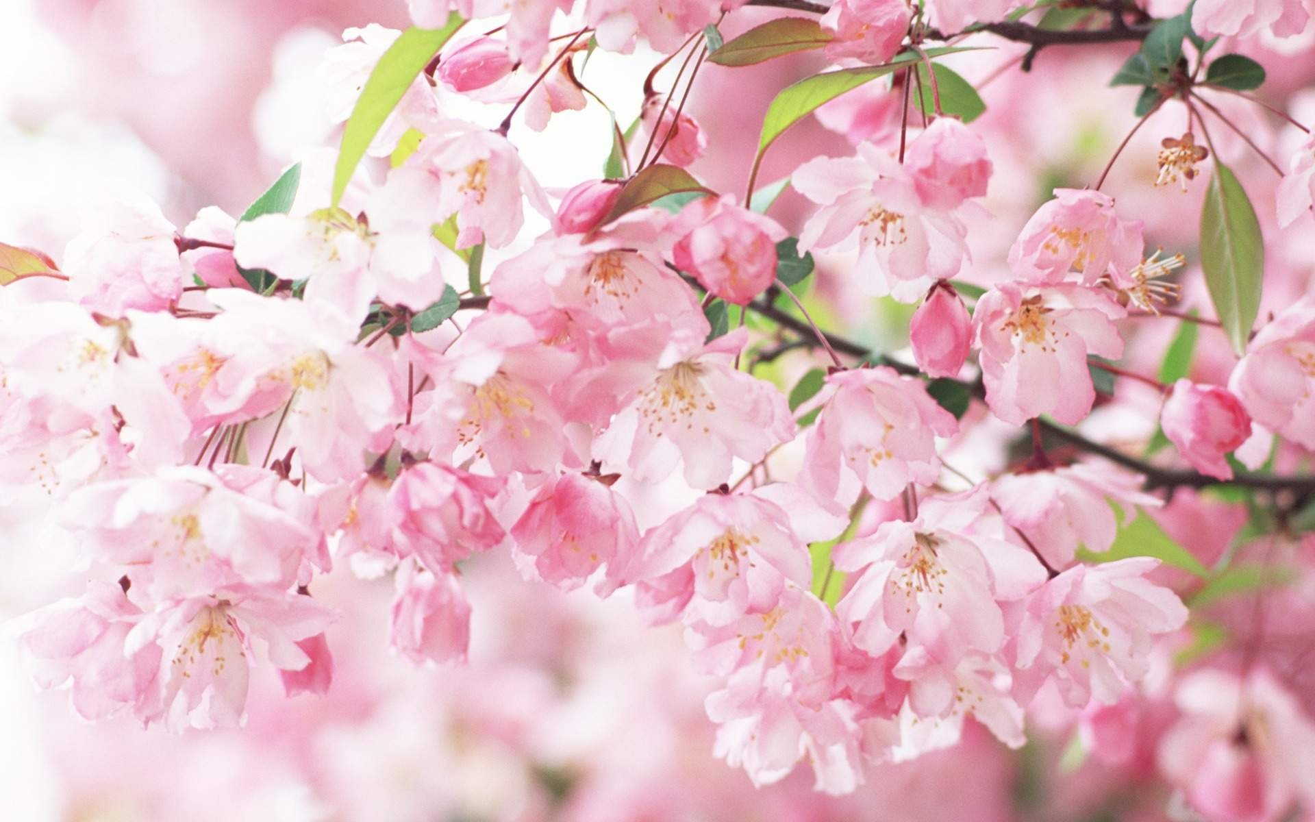 Flower Background Tumblr Download Free Stunning Wallpapers For