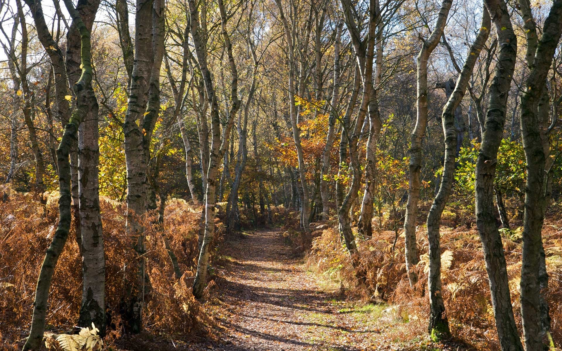 Woods Background U00b7 U2460 Download Free Awesome Full HD