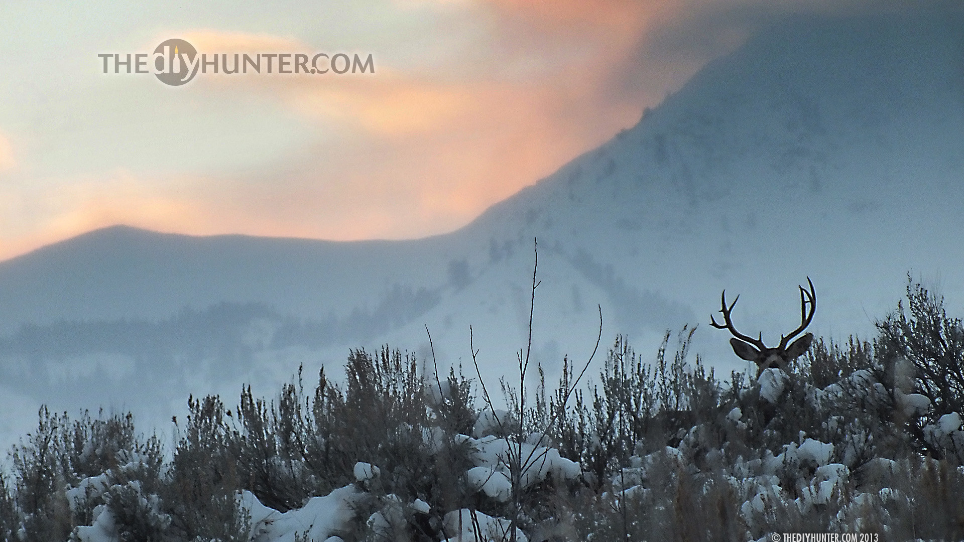 Deer hunting wallpaper for computer wallpapertag - Hunting wallpaper for android ...