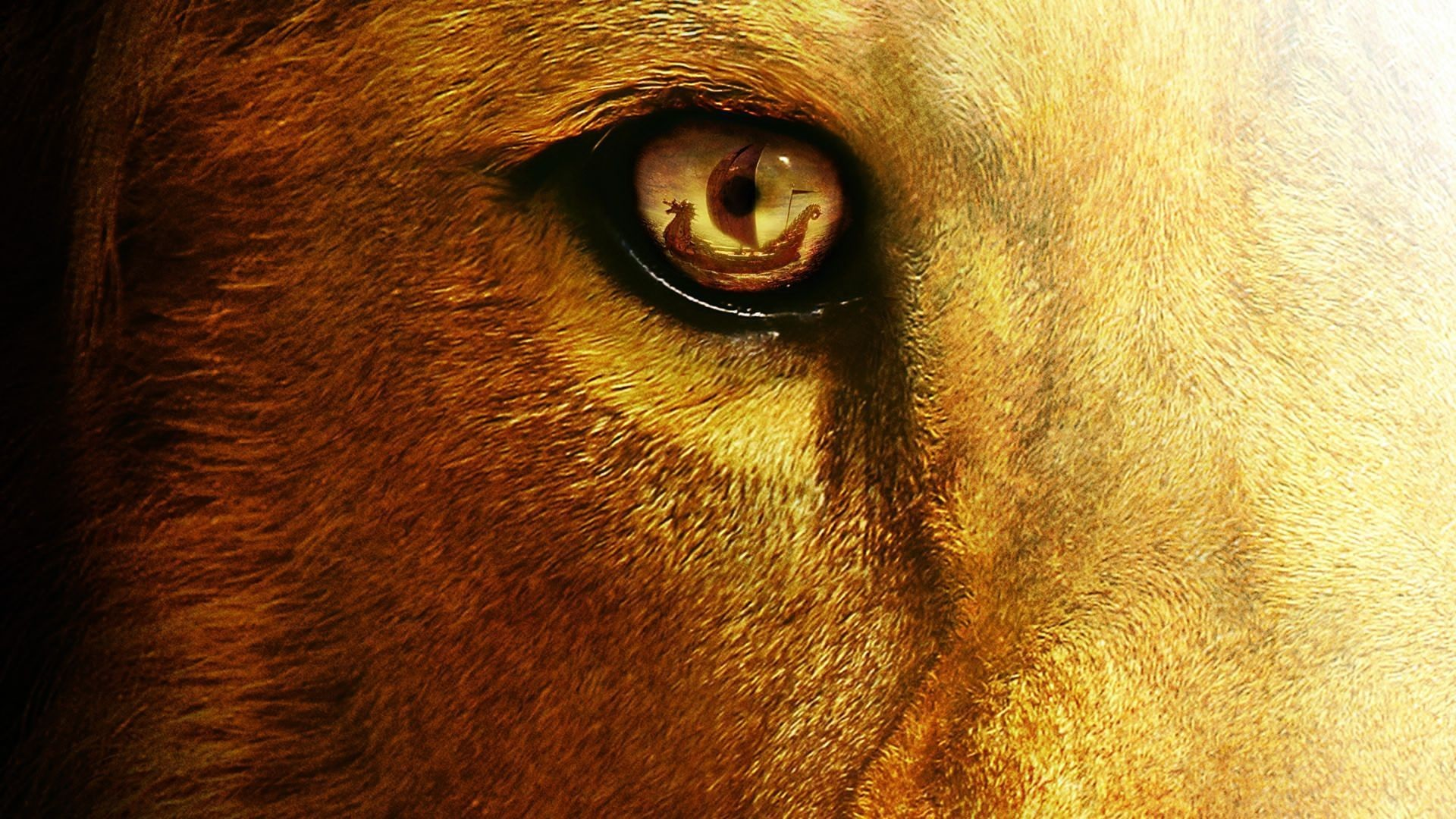 Best 25 Lion Hd Wallpaper Ideas On Pinterest: Angry Lion Eyes Wallpaper ·① WallpaperTag