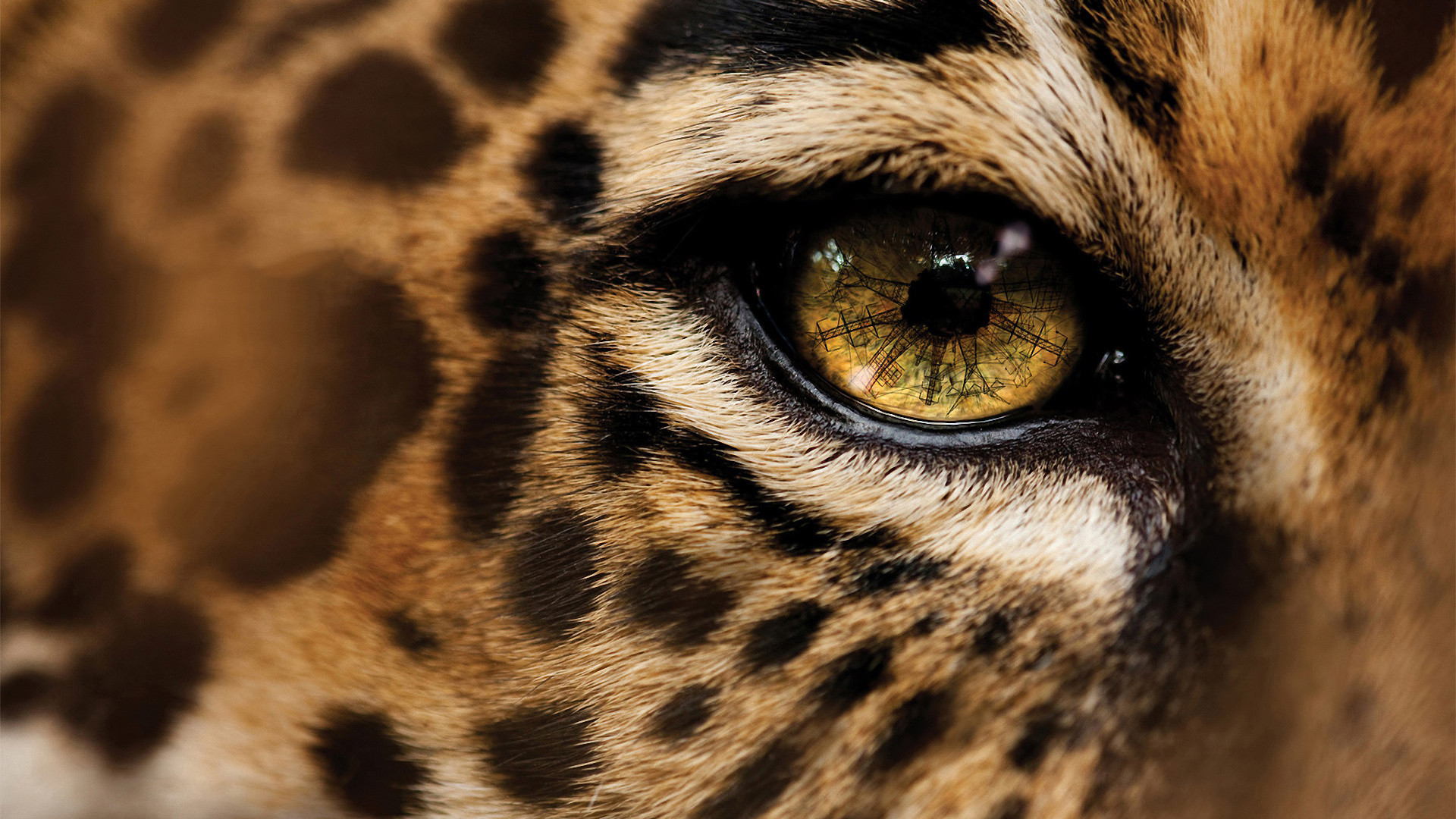 Cheetah Wallpaper Hd 183 ① Wallpapertag