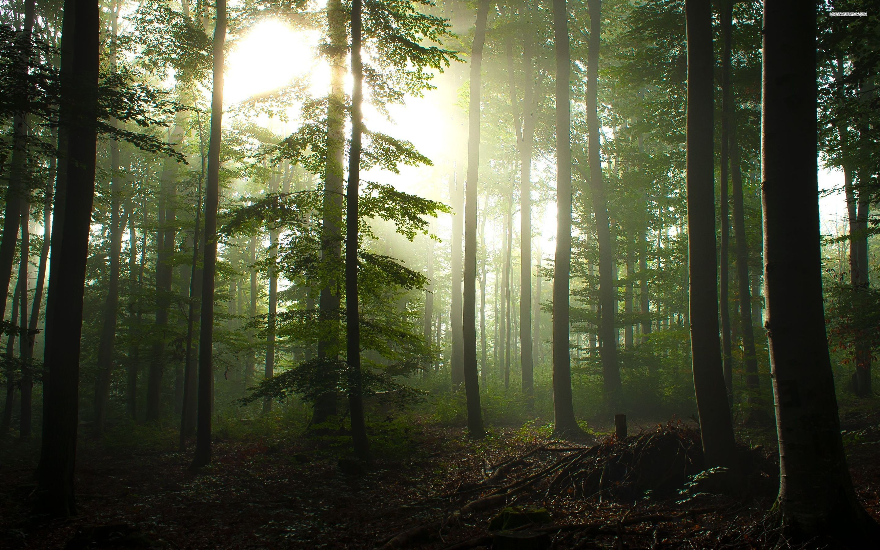 HD Forest wallpaper ·① Download free High Resolution ...
