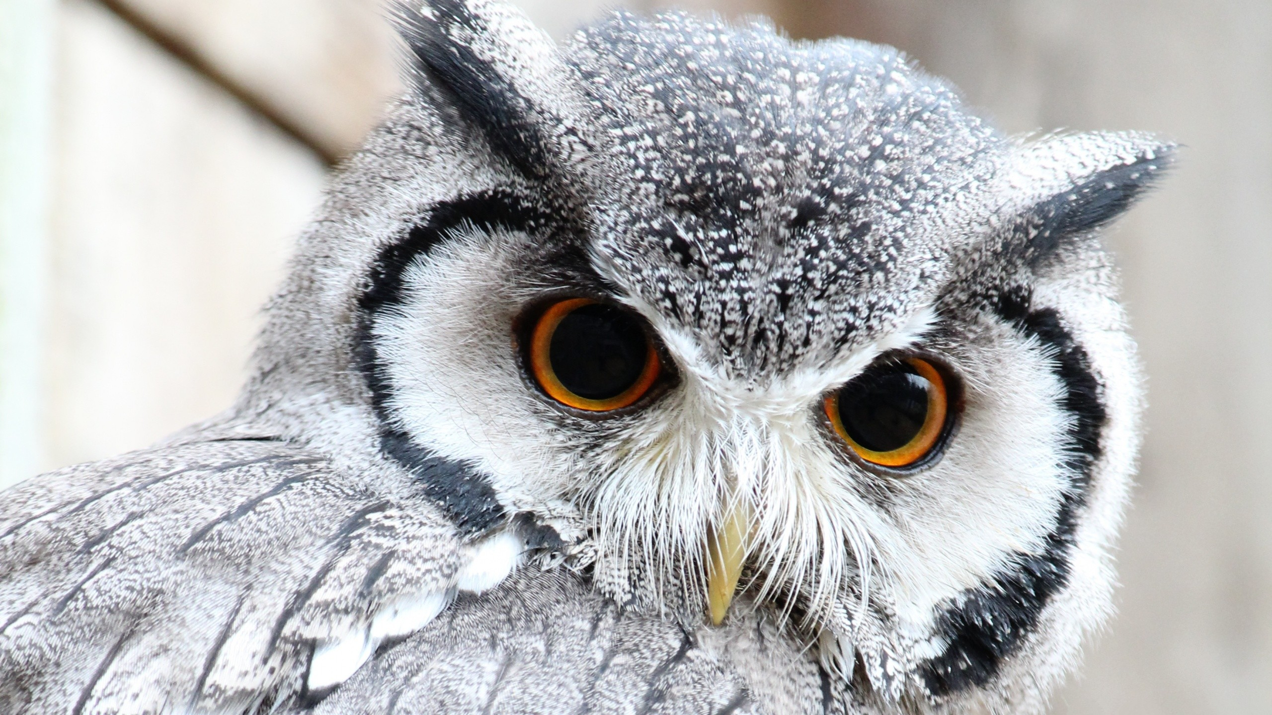 cute owl images - HD 2880×1800