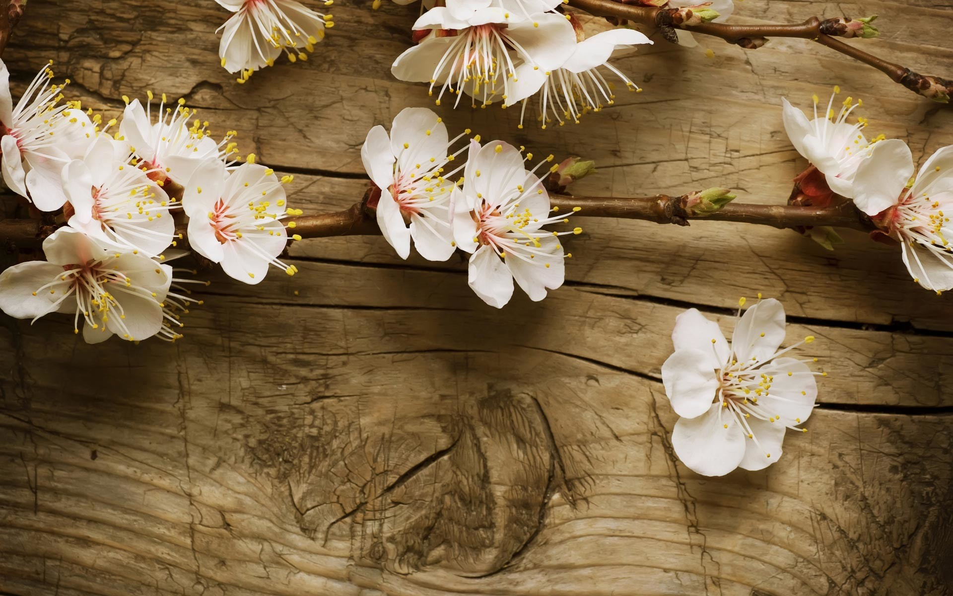 hd spring wallpapers for desktop ·①