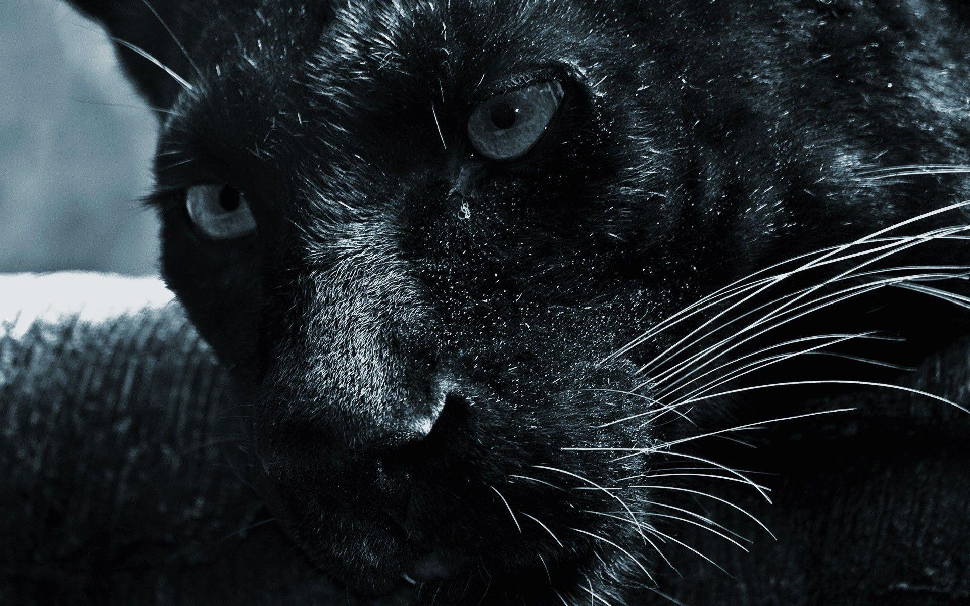 Black Panther Wallpaper Download Free Amazing Hd