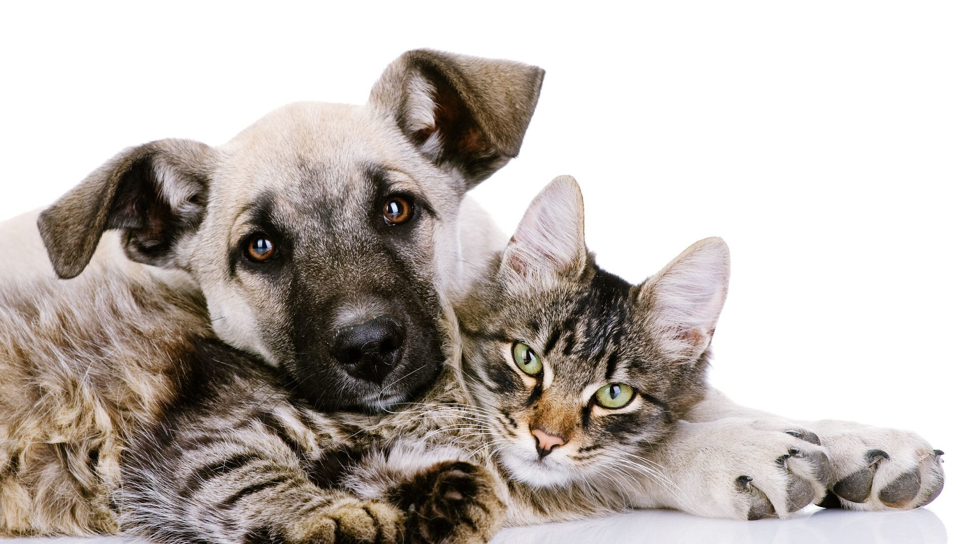 Cats And Dogs Wallpaper ·① WallpaperTag