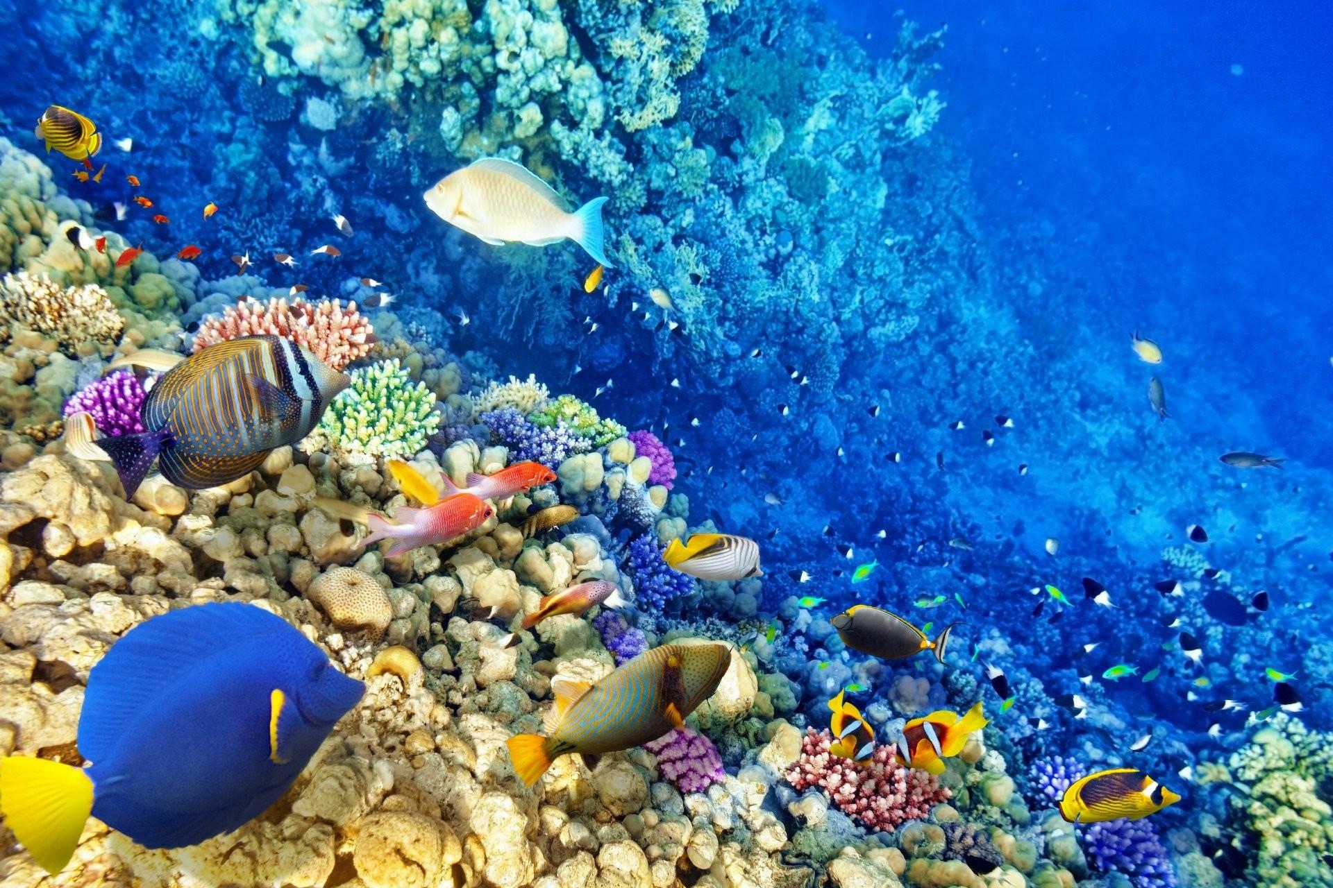 Coral Reef Wallpapers ·① WallpaperTag