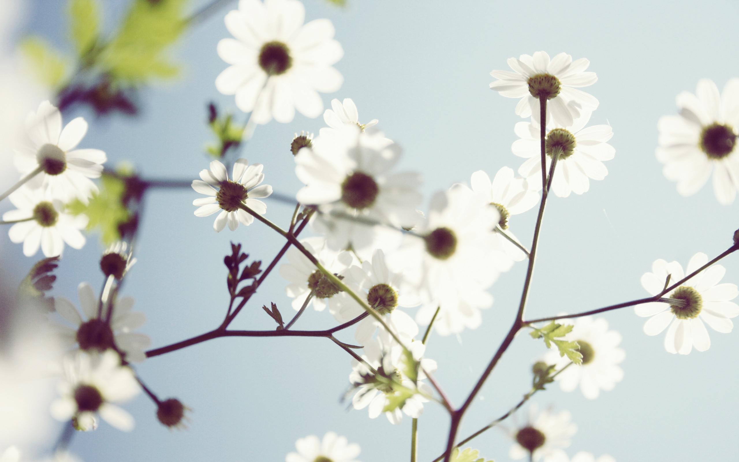 White Flower Wallpaper ·①