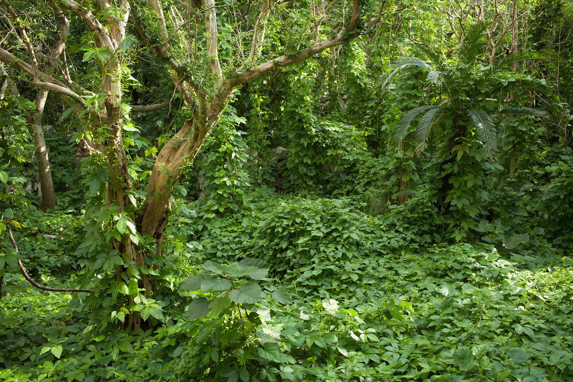 Tropical RainForest Wallpaper ·① WallpaperTag
