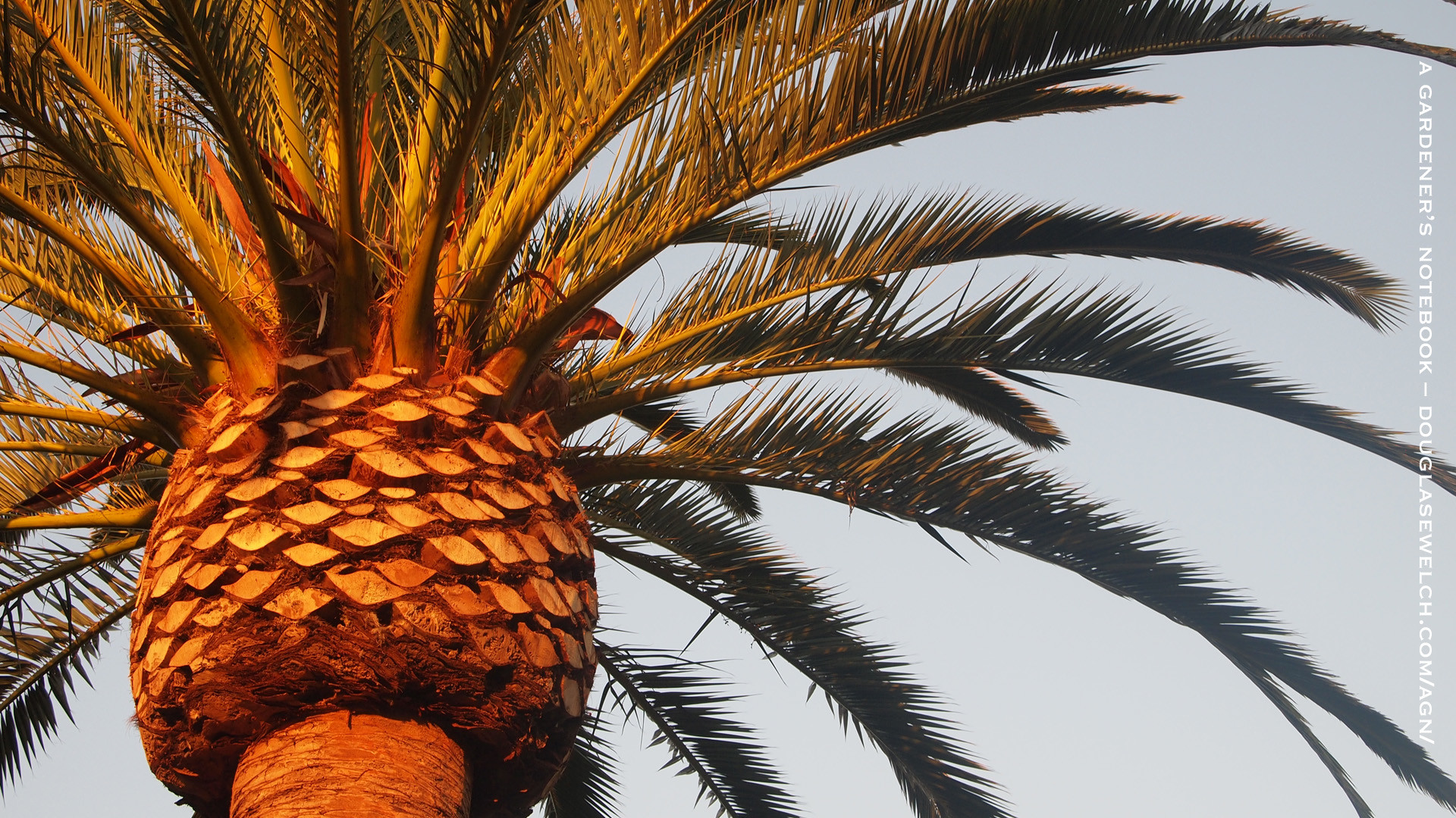 Palm tree desktop wallpaper wallpapertag - Palm tree wallpaper for android ...