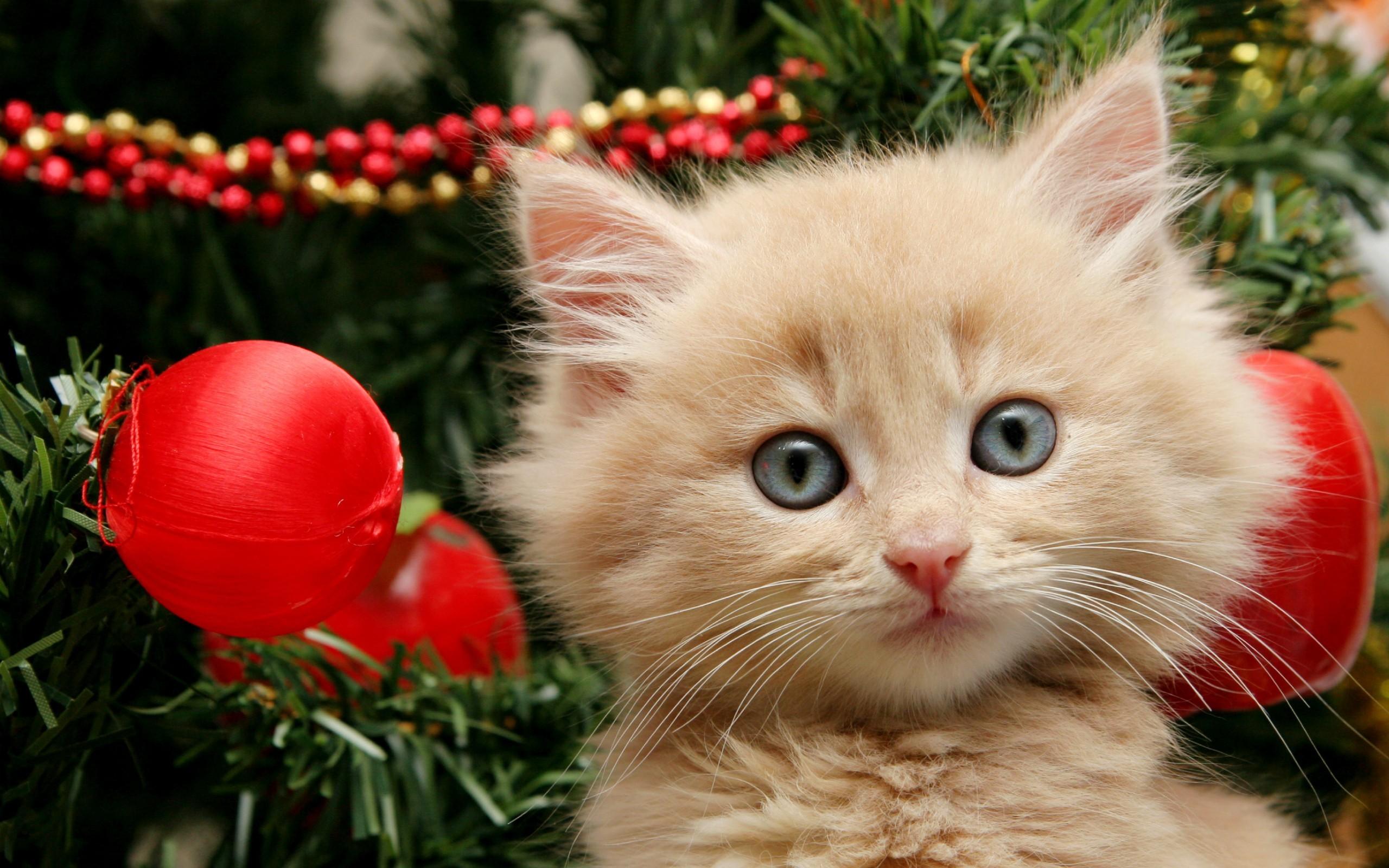 Christmas Kitten Wallpaper Wallpapertag