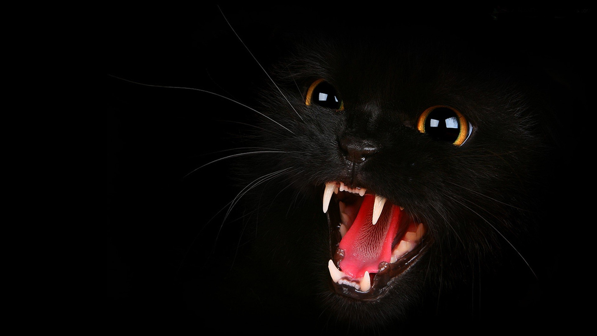 1920x1080 Cat Wallpaper Black And White Download 1920x1200