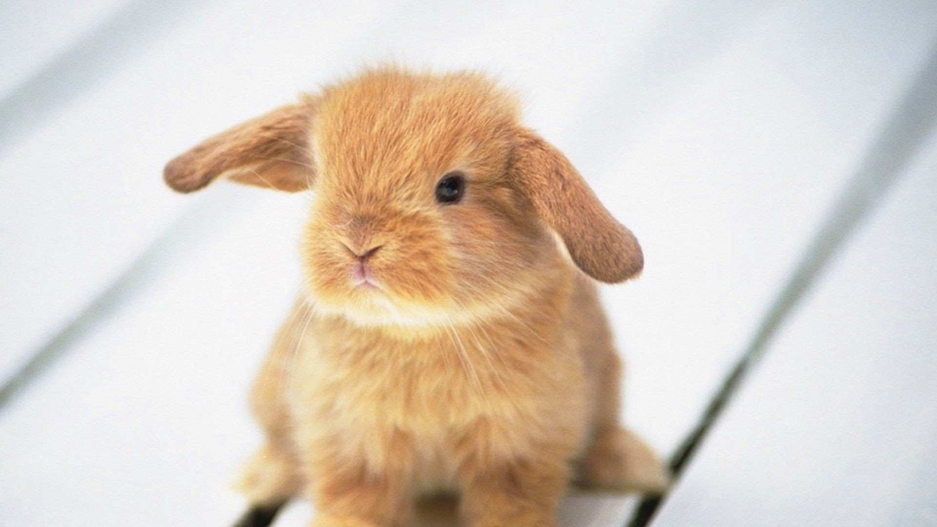 Cute Bunny Backgrounds Wallpapertag