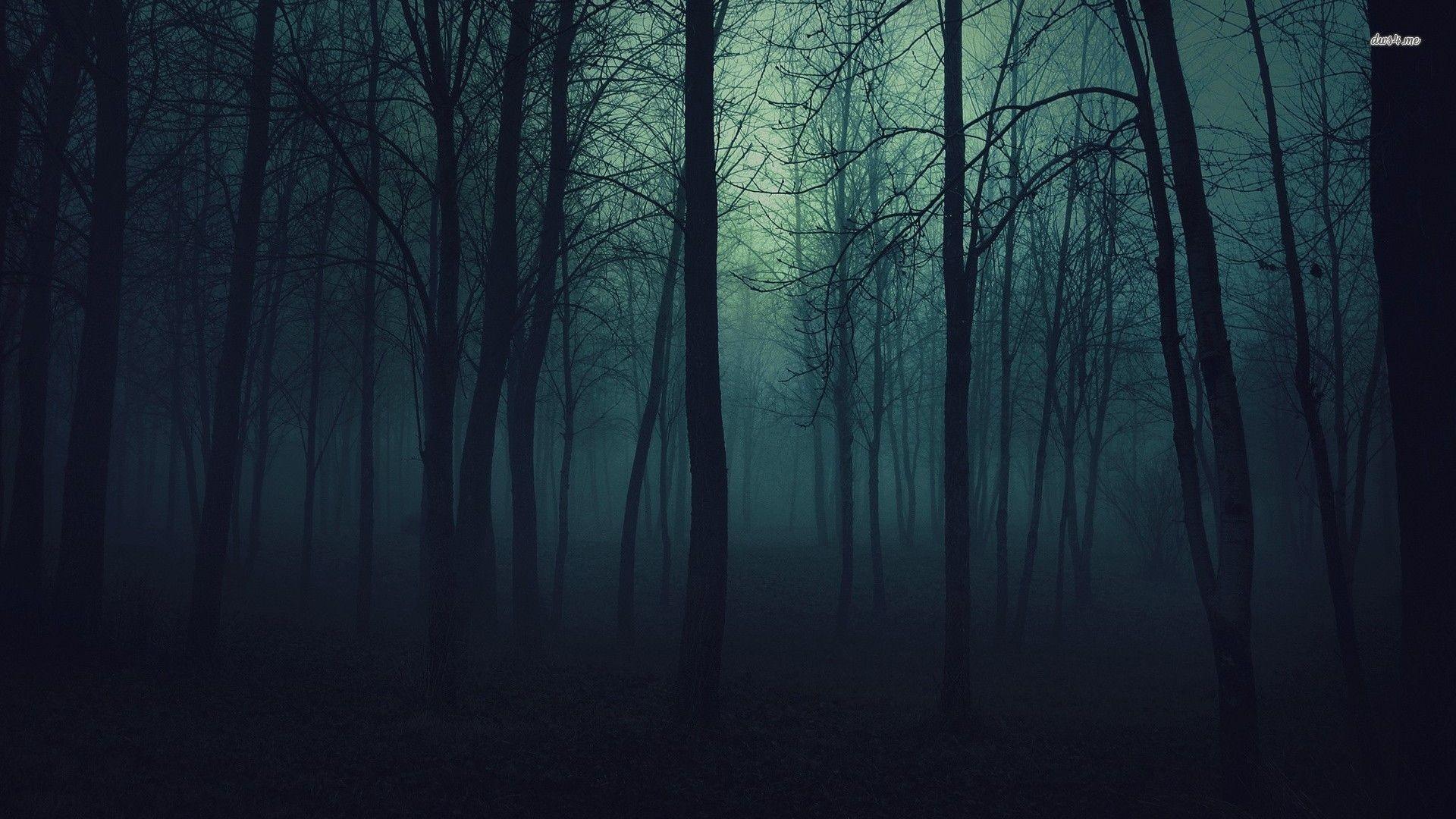 Free Download Dark Forest Wallpaper 1920x1080 For Windows