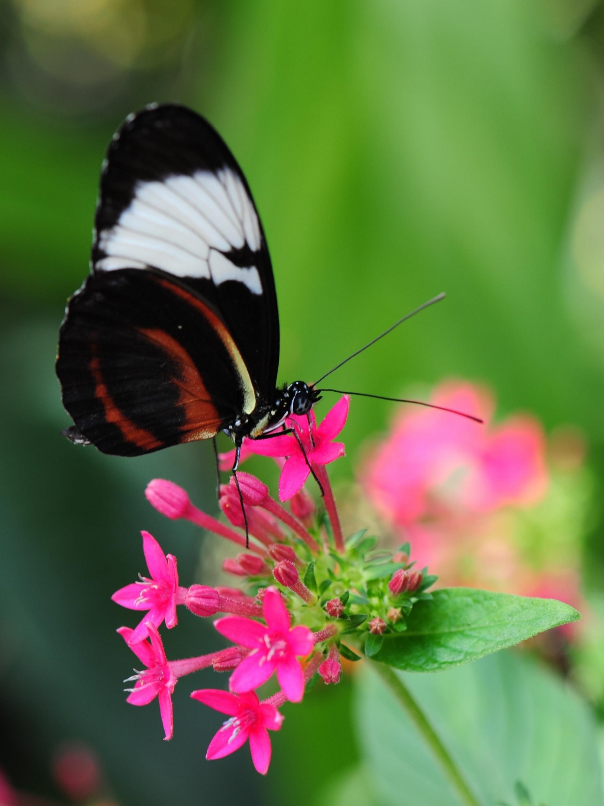 Pretty Butterfly Wallpaper