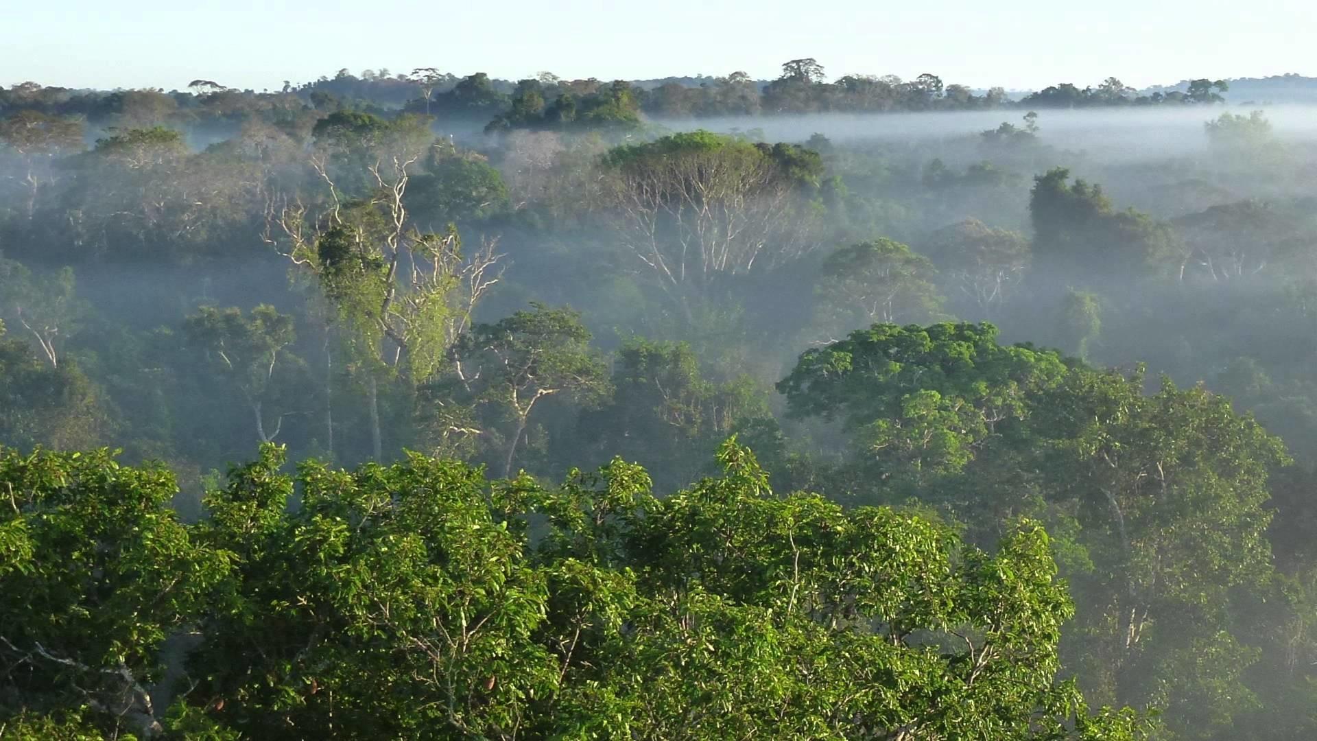 леса амазонки картинка ванили происходит