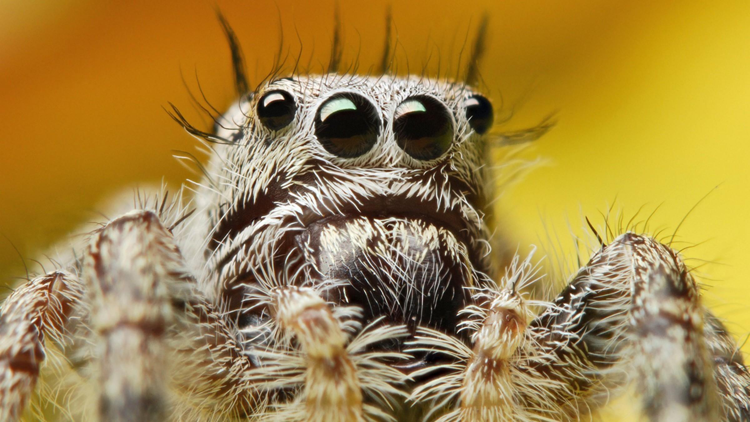 природа животные паук  № 2544194 загрузить