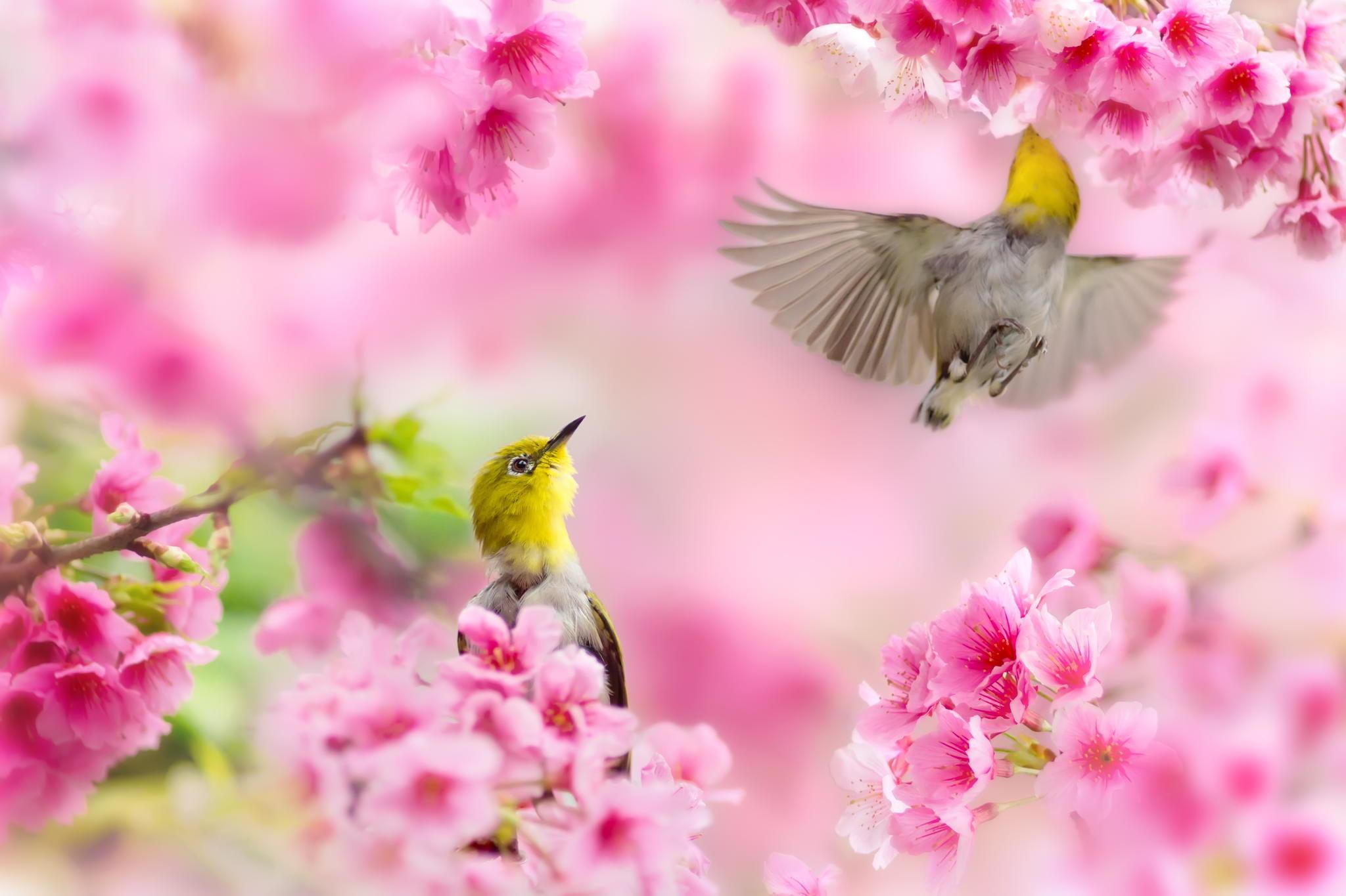 Spring animals desktop wallpaper wallpapertag - Free computer backgrounds for spring ...