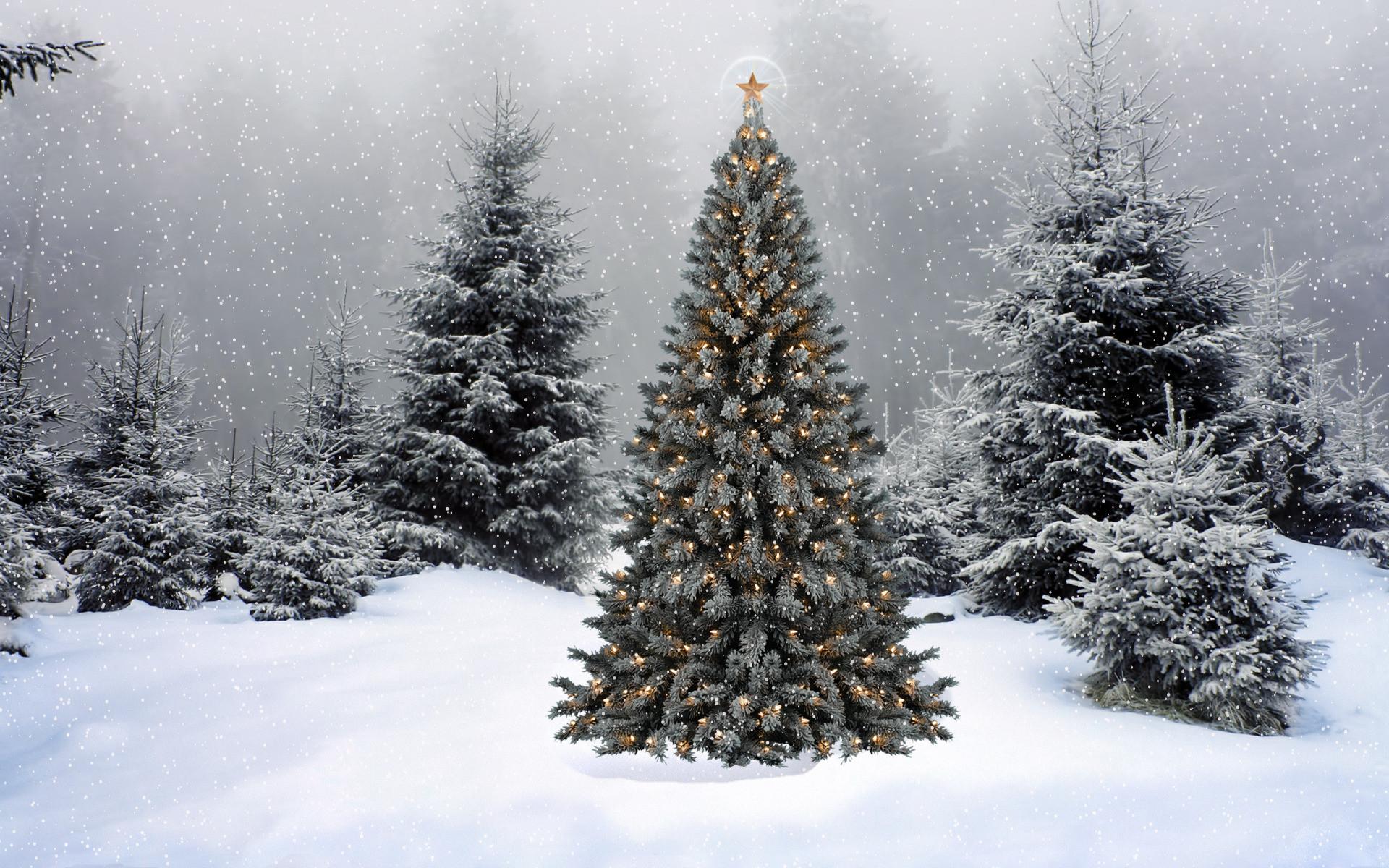 Christmas Tree Desktop Wallpaper ·① WallpaperTag