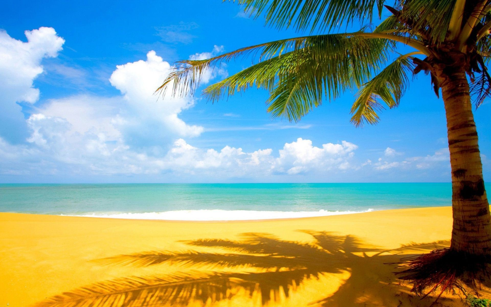 Beach Free Ipad Wallpapers: Palm Tree Wallpaper ·① Download Free HD Wallpapers For