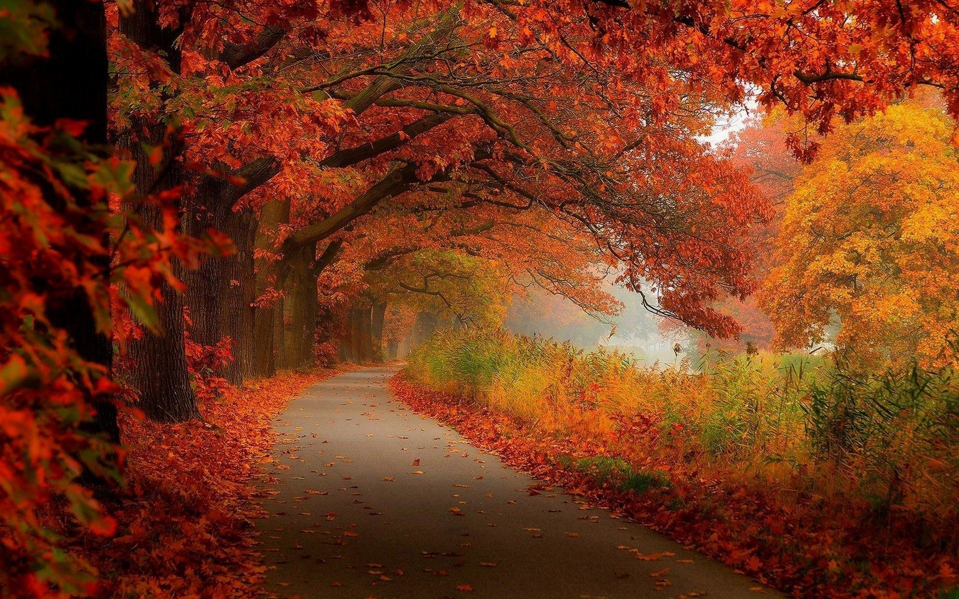 42 Autumn Backgrounds Download Free Stunning Hd: Fall Scenery Wallpapers ·① WallpaperTag
