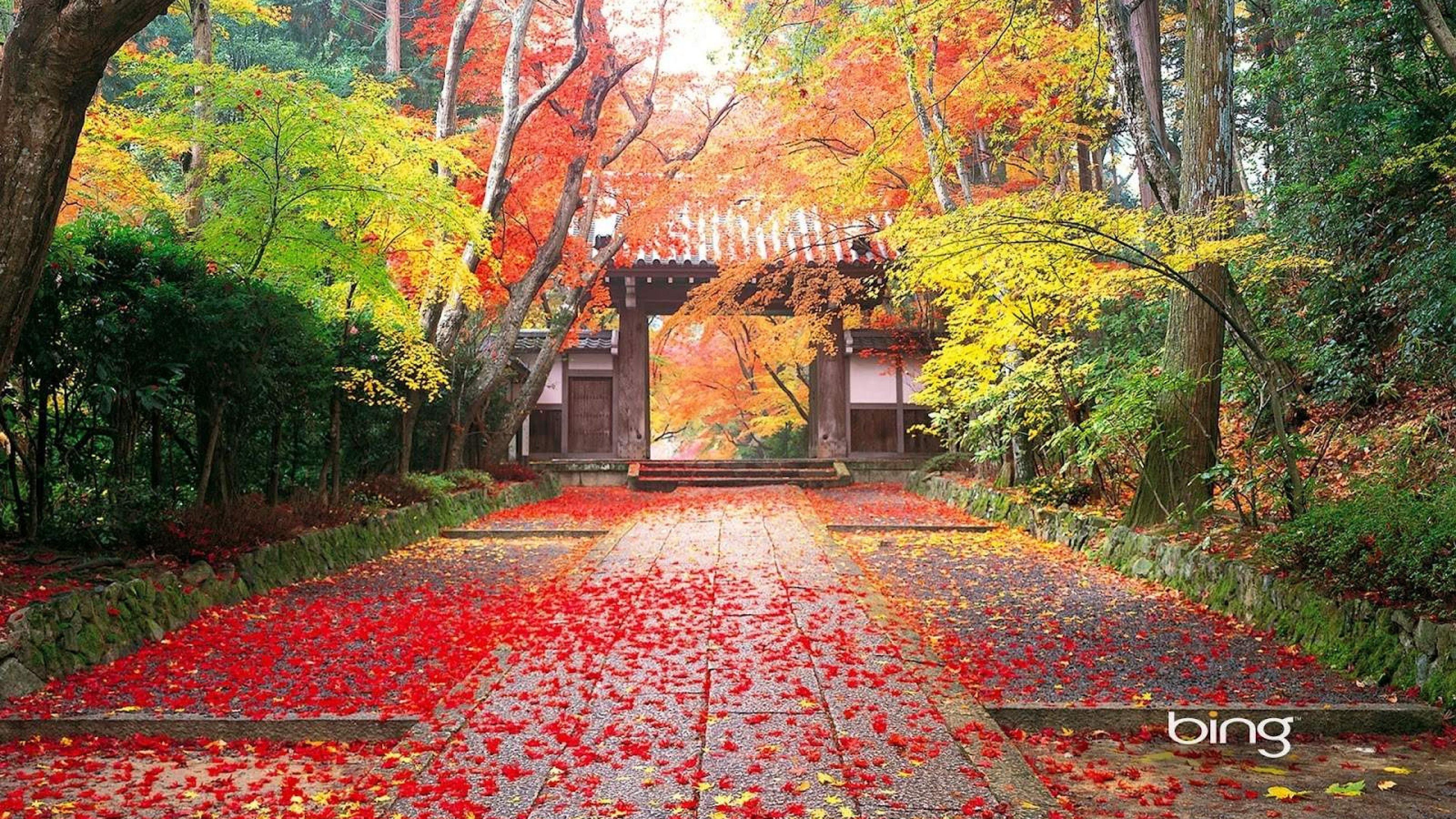 Autumn desktop wallpaper ·① Download free stunning full HD ...