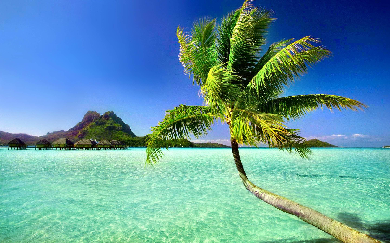 Palm Tree Beach Wallpaper 1