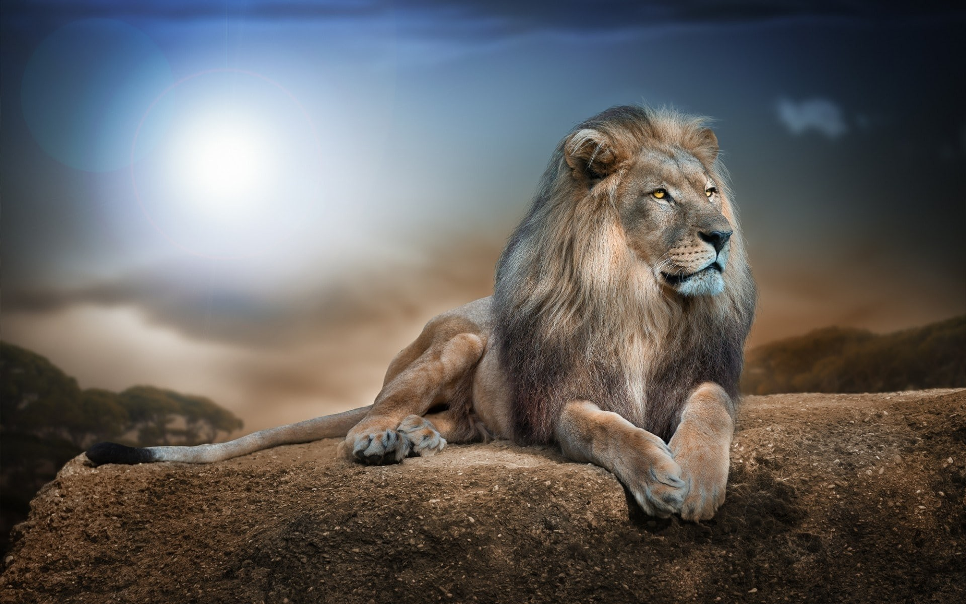 Lion Wallpaper Hd Download Free Amazing Hd Wallpapers For