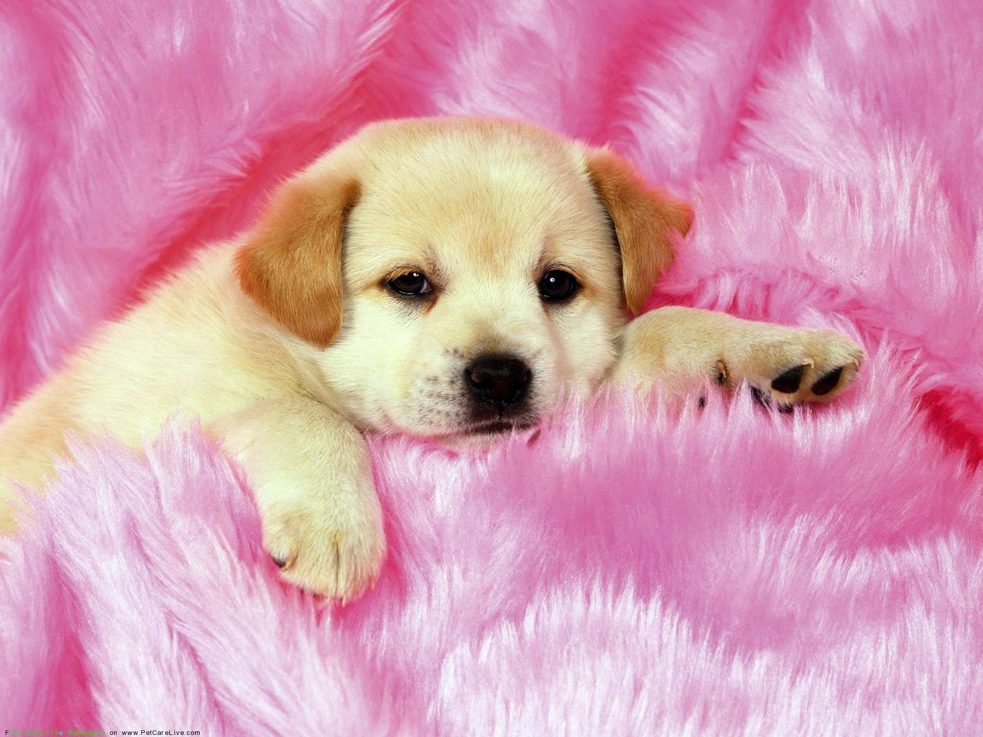 Puppies And Kittens Wallpaper ·① WallpaperTag