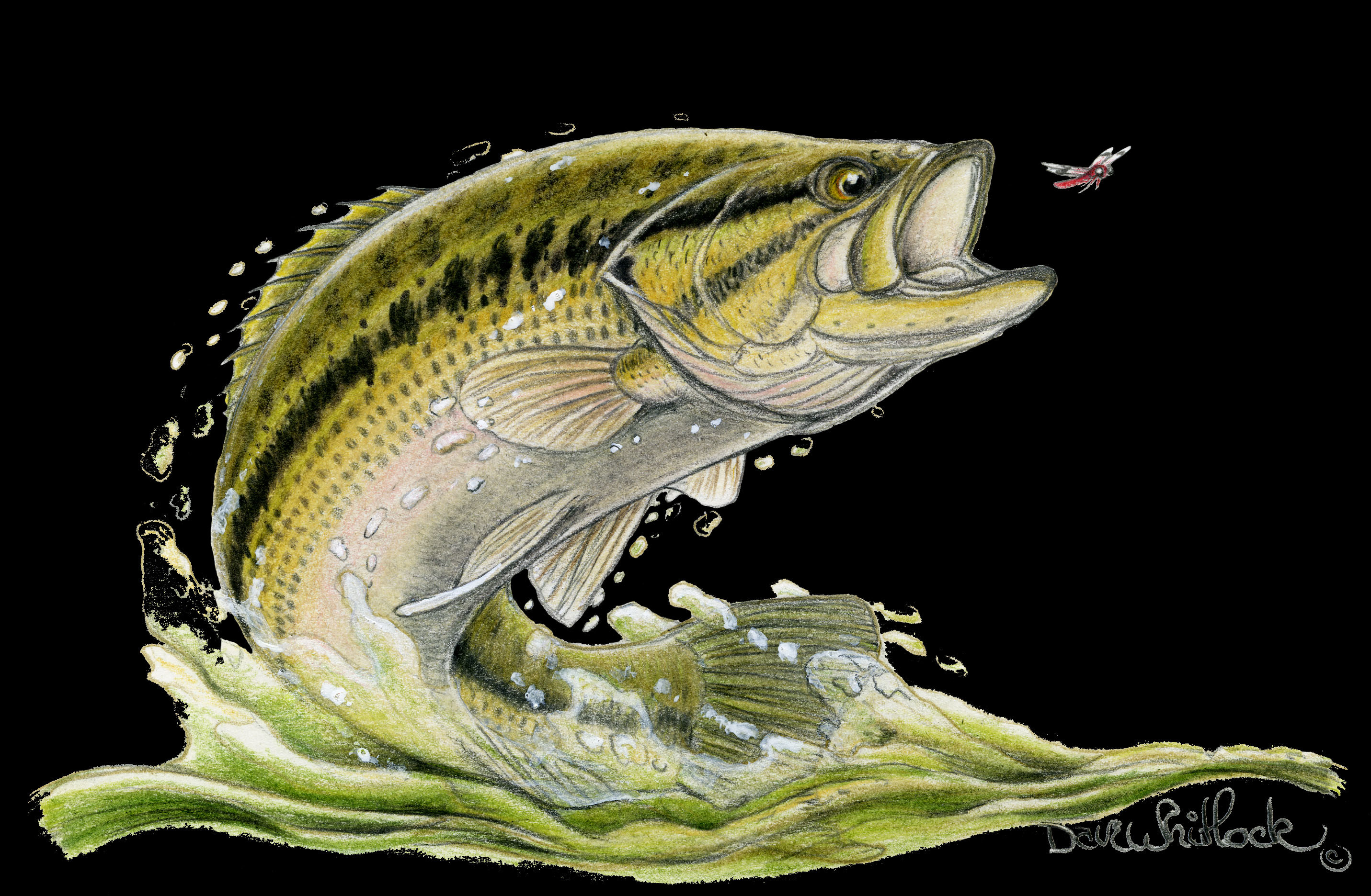 Herbicides likely source of growing intersex fish problem