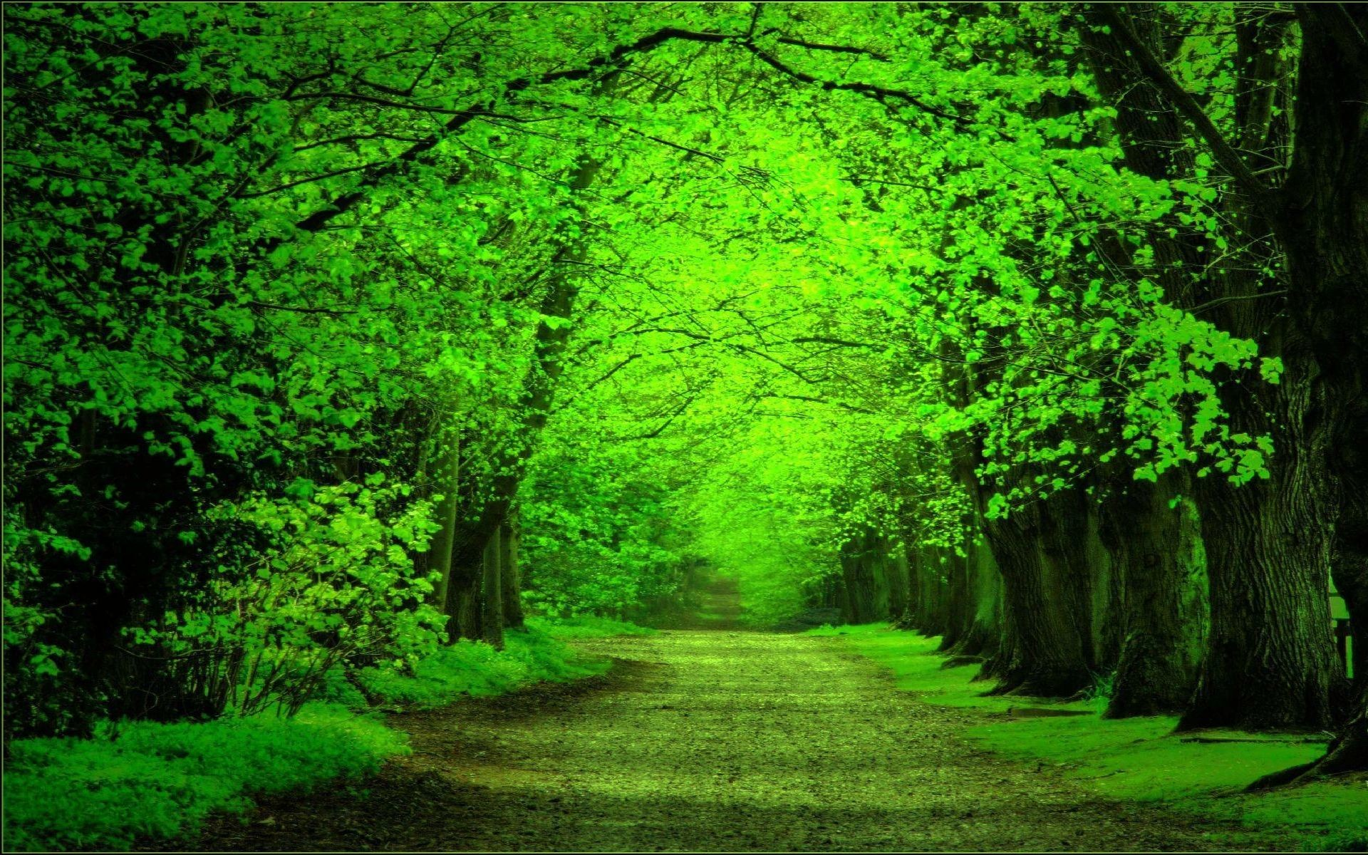 Green Forest Background ·① WallpaperTag