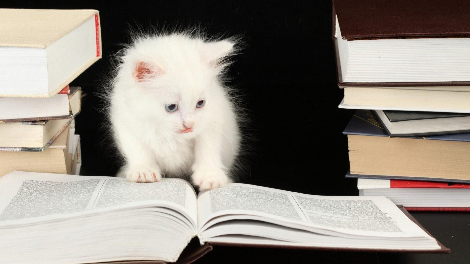 kittens wallpaper ·① download free stunning full hd wallpapers